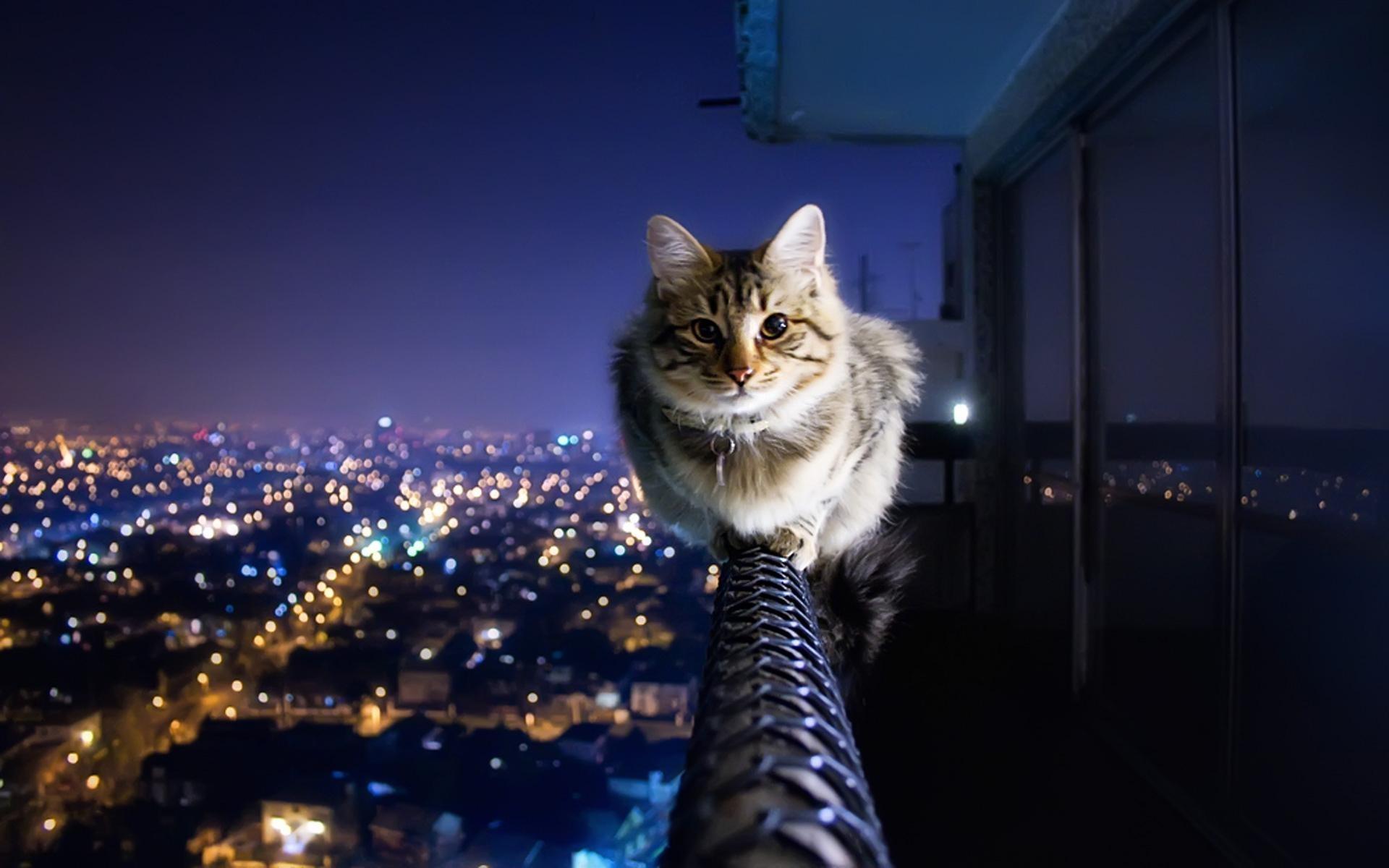 25745 скачать обои Кошки (Коты, Котики), Животные - заставки и картинки бесплатно