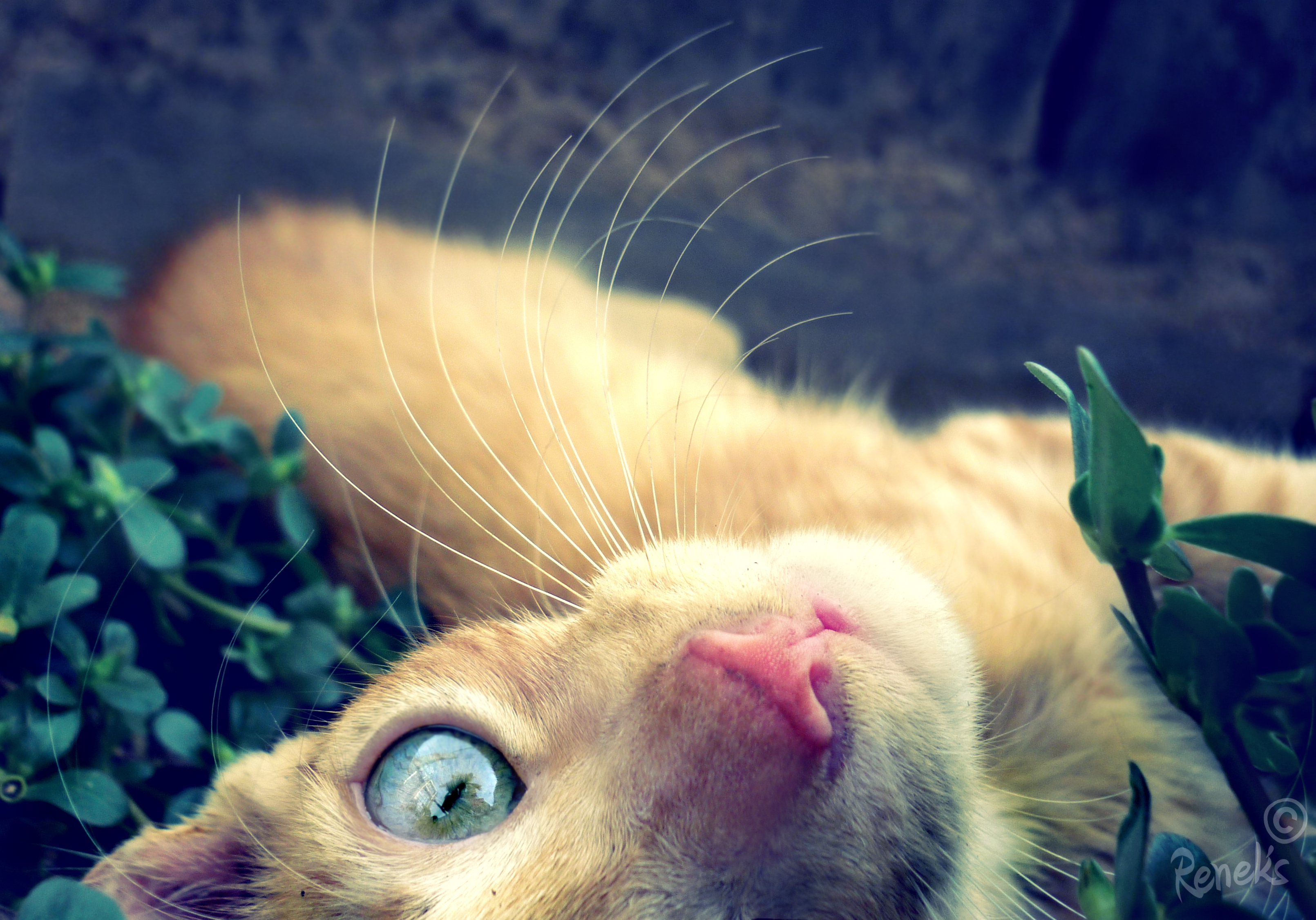 57126 download wallpaper Animals, Cat, Muzzle, Redhead, Eyes screensavers and pictures for free