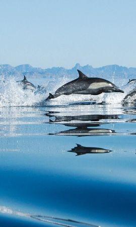 34983 baixar papel de parede Animais, Golfinhos - protetores de tela e imagens gratuitamente