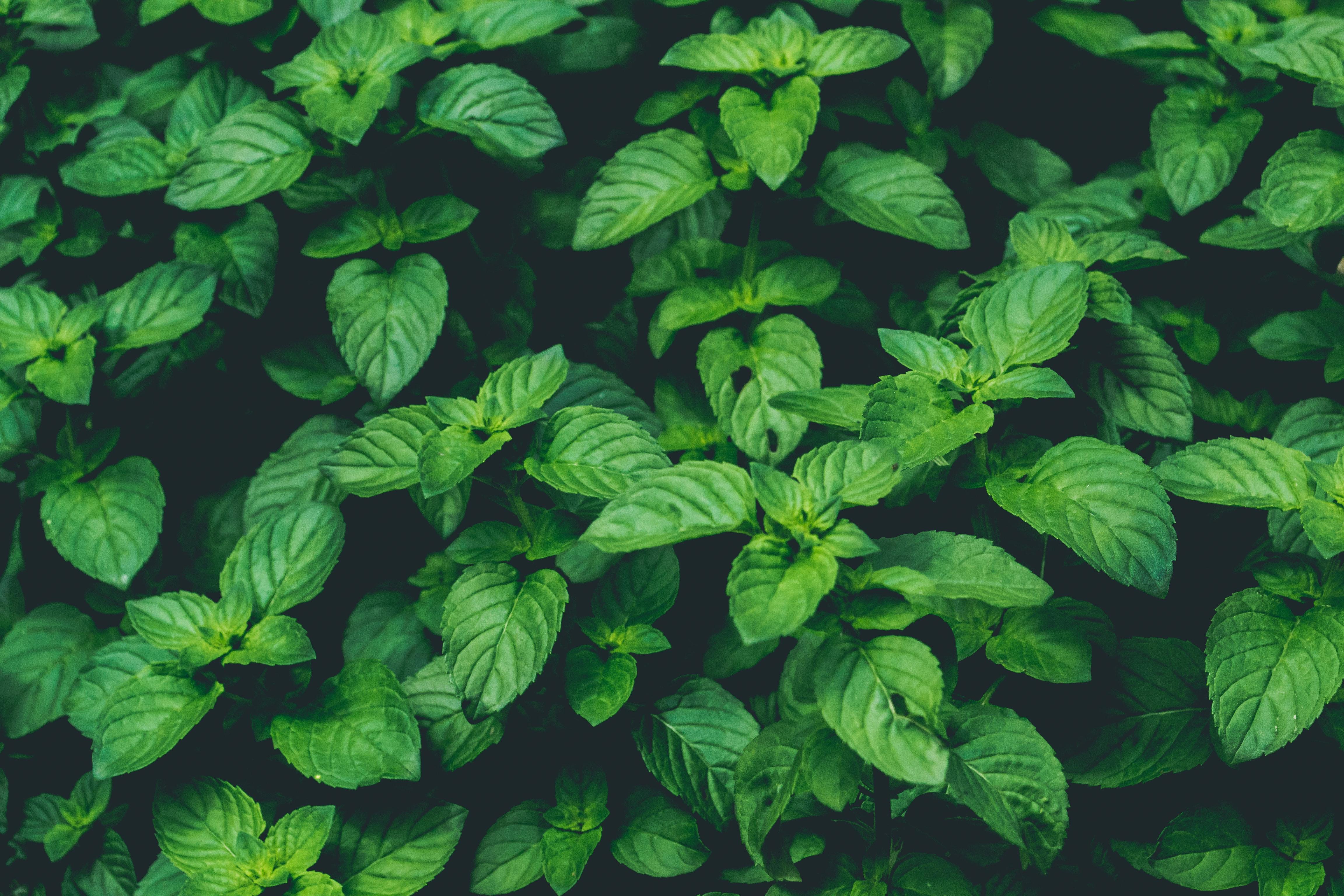 156563 скачать обои Макро, Растения, Зеленый, Крупным Планом - заставки и картинки бесплатно