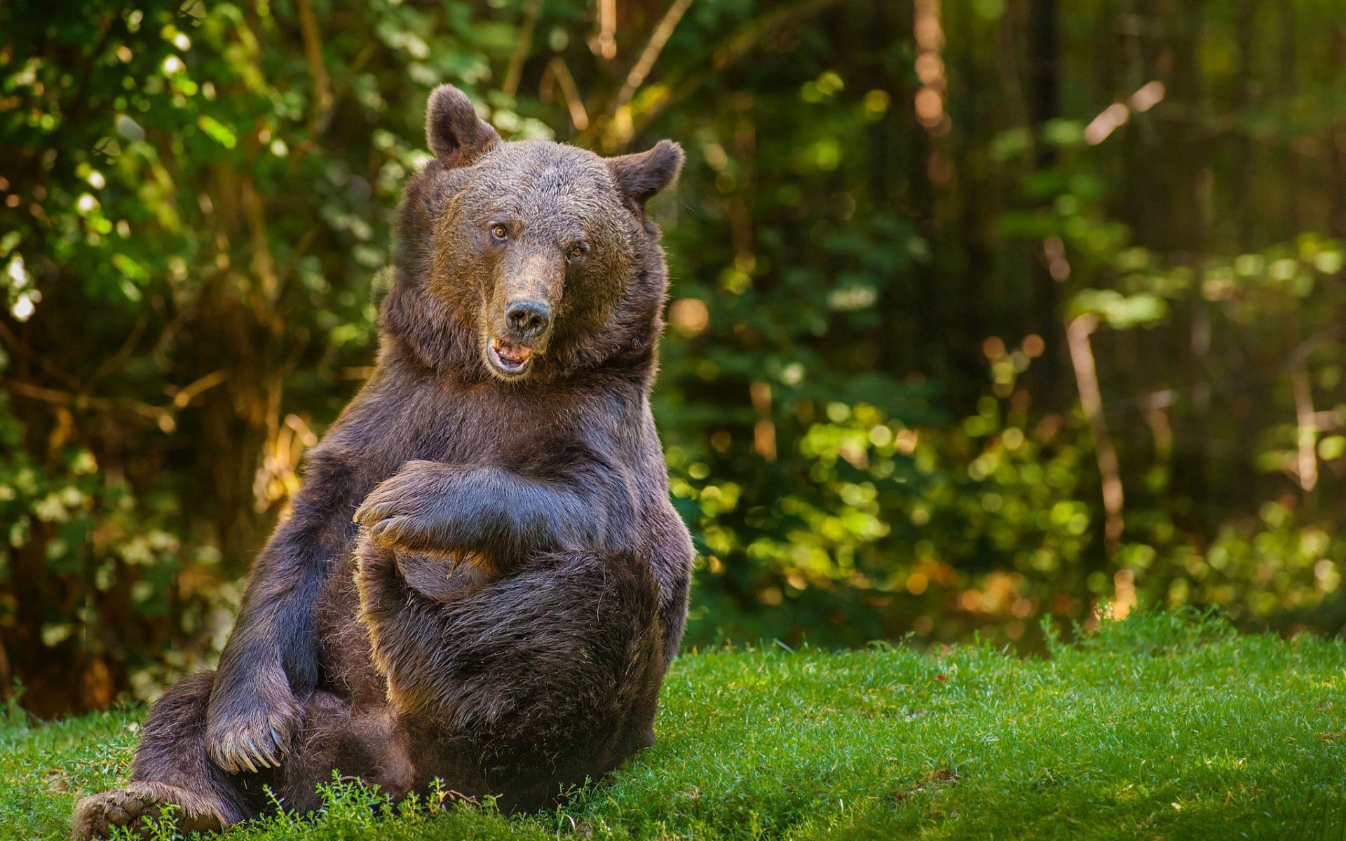 114728 download wallpaper Animals, Bear, Grass, Trees, Forest, Cool screensavers and pictures for free