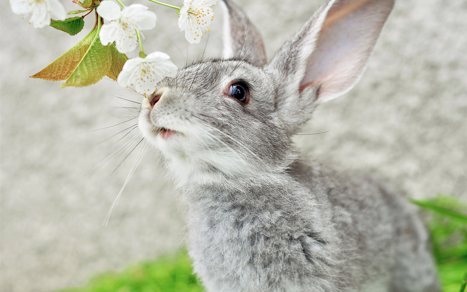 29014 Screensavers and Wallpapers Rabbits for phone. Download Animals, Rabbits pictures for free