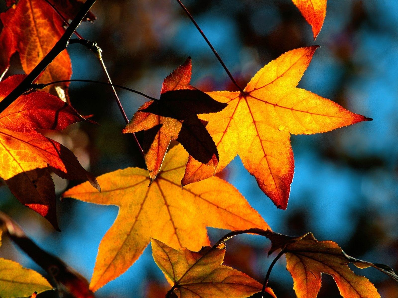 4530 скачать обои Растения, Осень, Листья - заставки и картинки бесплатно