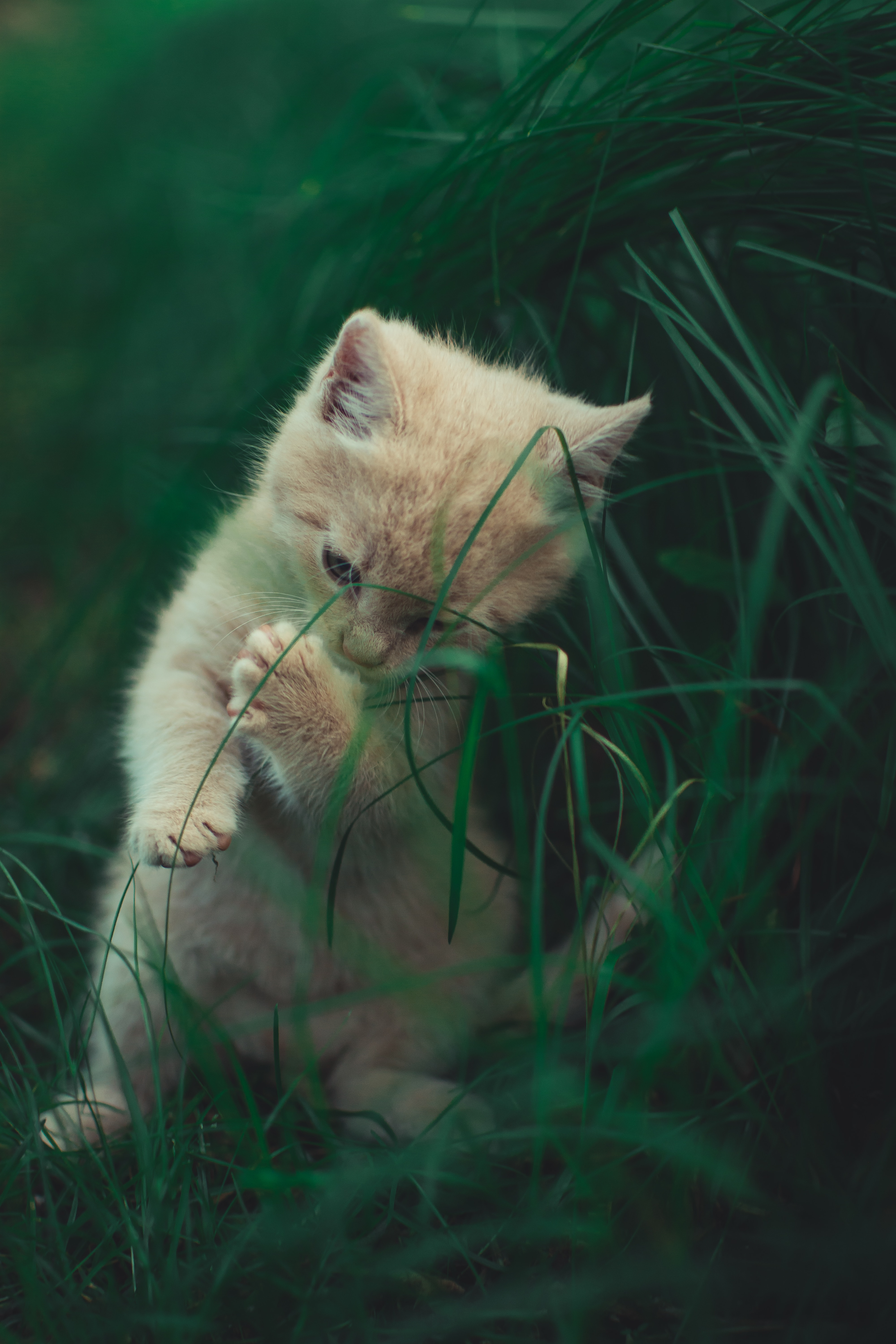 157644 Screensavers and Wallpapers Nice for phone. Download Animals, Grass, Cat, Kitty, Kitten, Nice, Sweetheart, Playful pictures for free