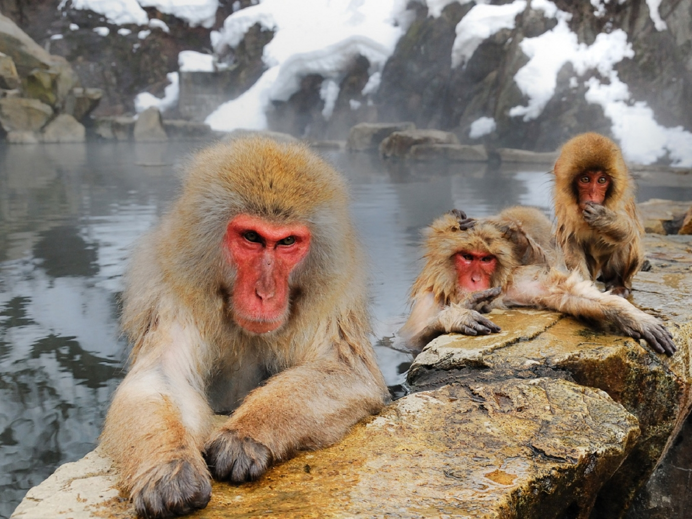 34706 Screensavers and Wallpapers Monkeys for phone. Download Animals, Monkeys pictures for free