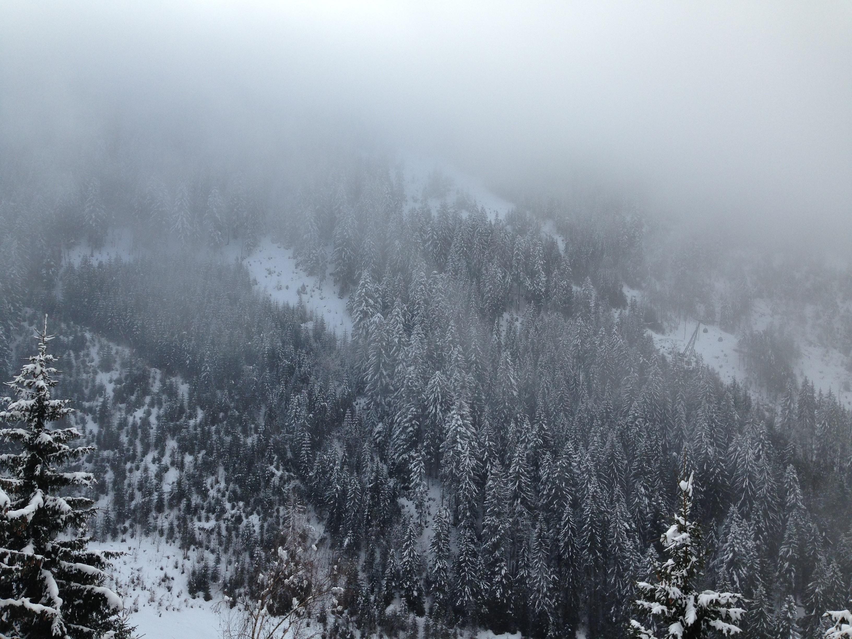 126617 скачать обои Природа, Деревья, Снег, Туман, Горы, Сосны - заставки и картинки бесплатно