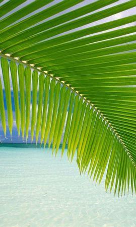 7792 скачать обои Растения, Пальмы - заставки и картинки бесплатно