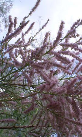 7381 скачать обои Растения, Деревья - заставки и картинки бесплатно