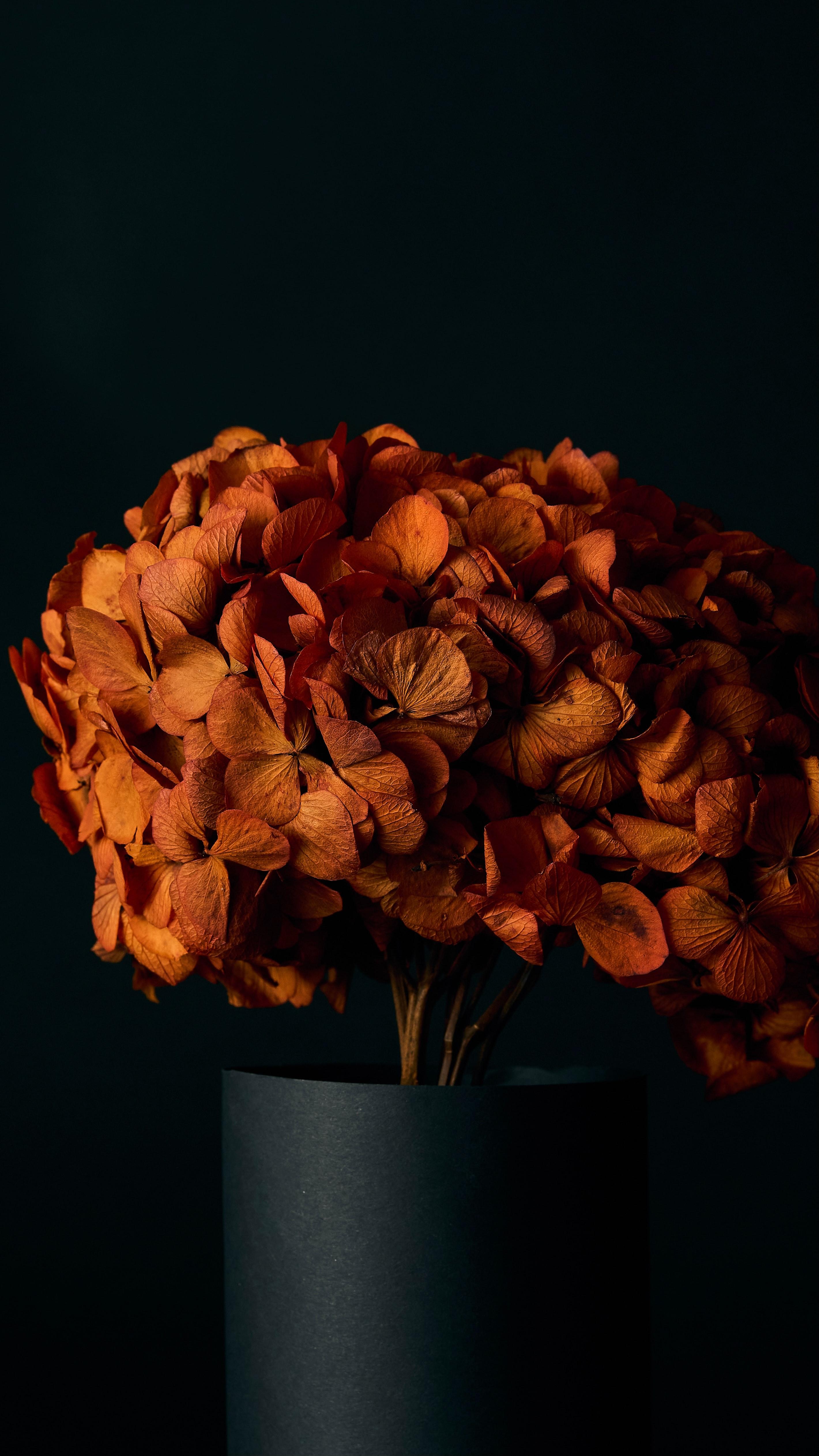 104445 скачать обои Цветы, Гортензия, Лепестки, Оранжевый - заставки и картинки бесплатно