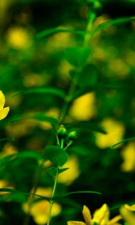 117020 скачать обои Цветы, Желтый, Цветение, Растения - заставки и картинки бесплатно