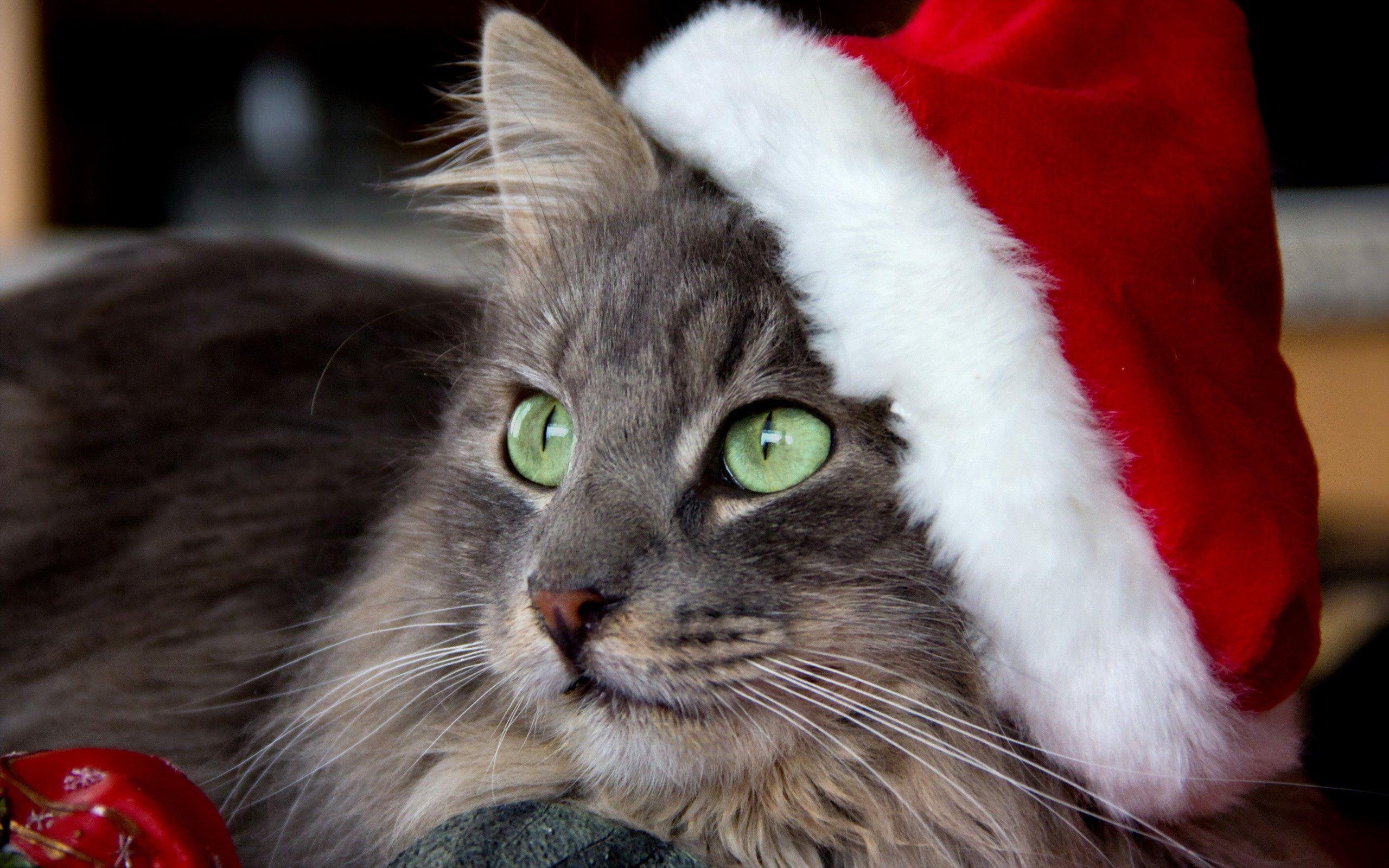 84534 Hintergrundbild 720x1280 kostenlos auf deinem Handy, lade Bilder Tiere, Neujahr, Der Kater, Katze, Schnauze, Neues Jahr, Deckel, Cap 720x1280 auf dein Handy herunter