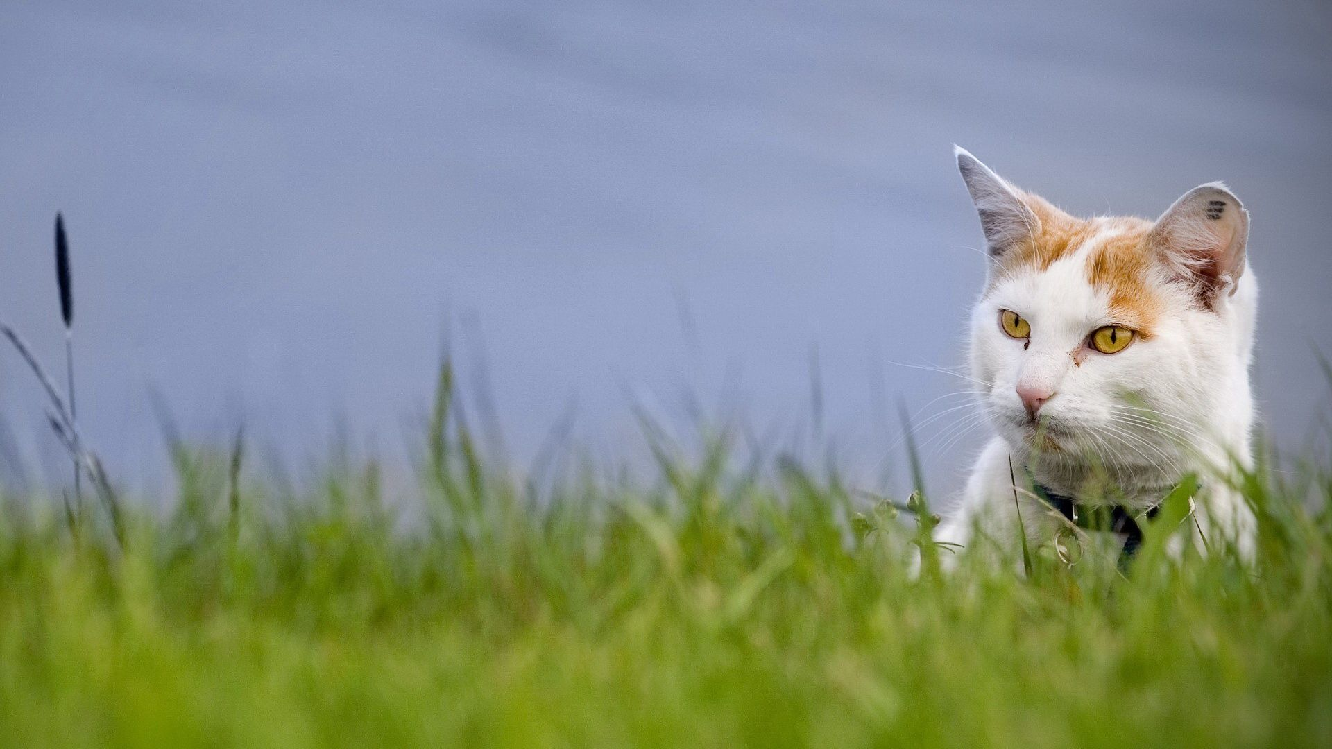 125936 download wallpaper Animals, Cat, Muzzle, Spotted, Spotty, Grass, Peek Out, Look Out screensavers and pictures for free