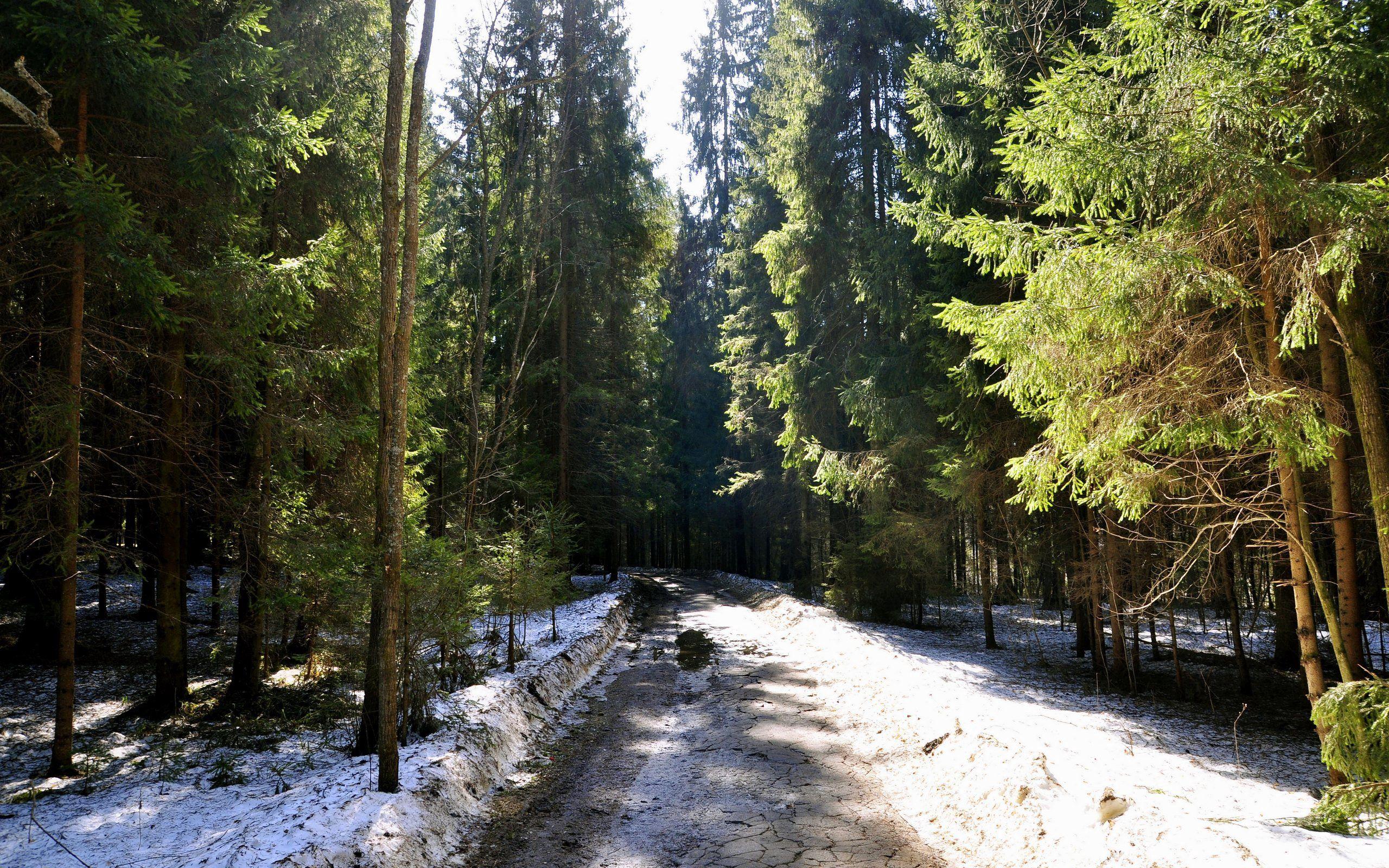 57970壁紙のダウンロード自然, 森林, 森, 道路, 道, 草, 泥, 垢, 雪-スクリーンセーバーと写真を無料で