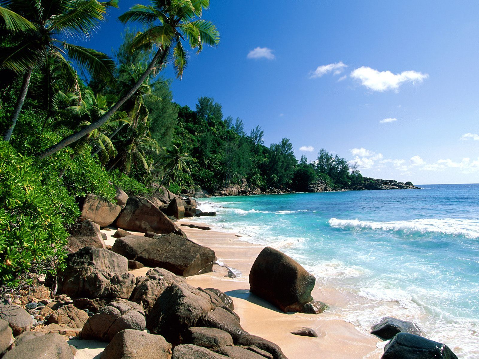 10947 Screensavers and Wallpapers Beach for phone. Download Beach, Landscape, Trees, Sea, Palms, Summer pictures for free