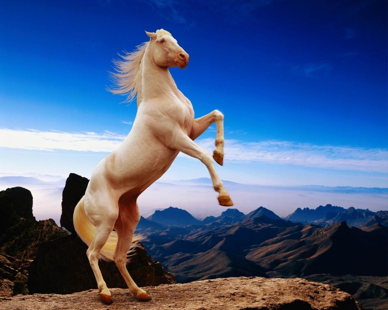 6680 download wallpaper Animals, Horses screensavers and pictures for free