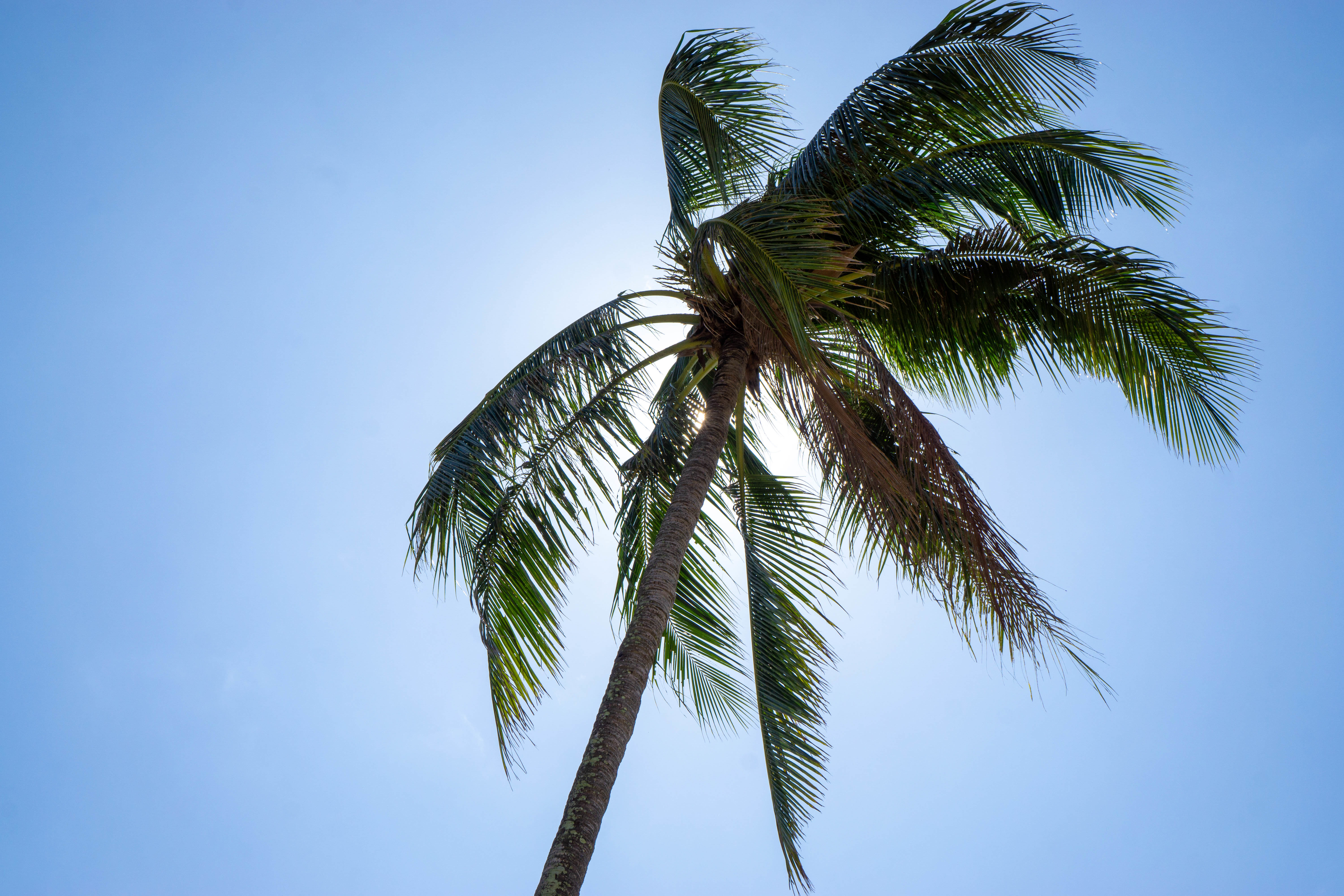 107753 download wallpaper Nature, Palm, Wood, Tree, Sky, Tropics, Summer screensavers and pictures for free