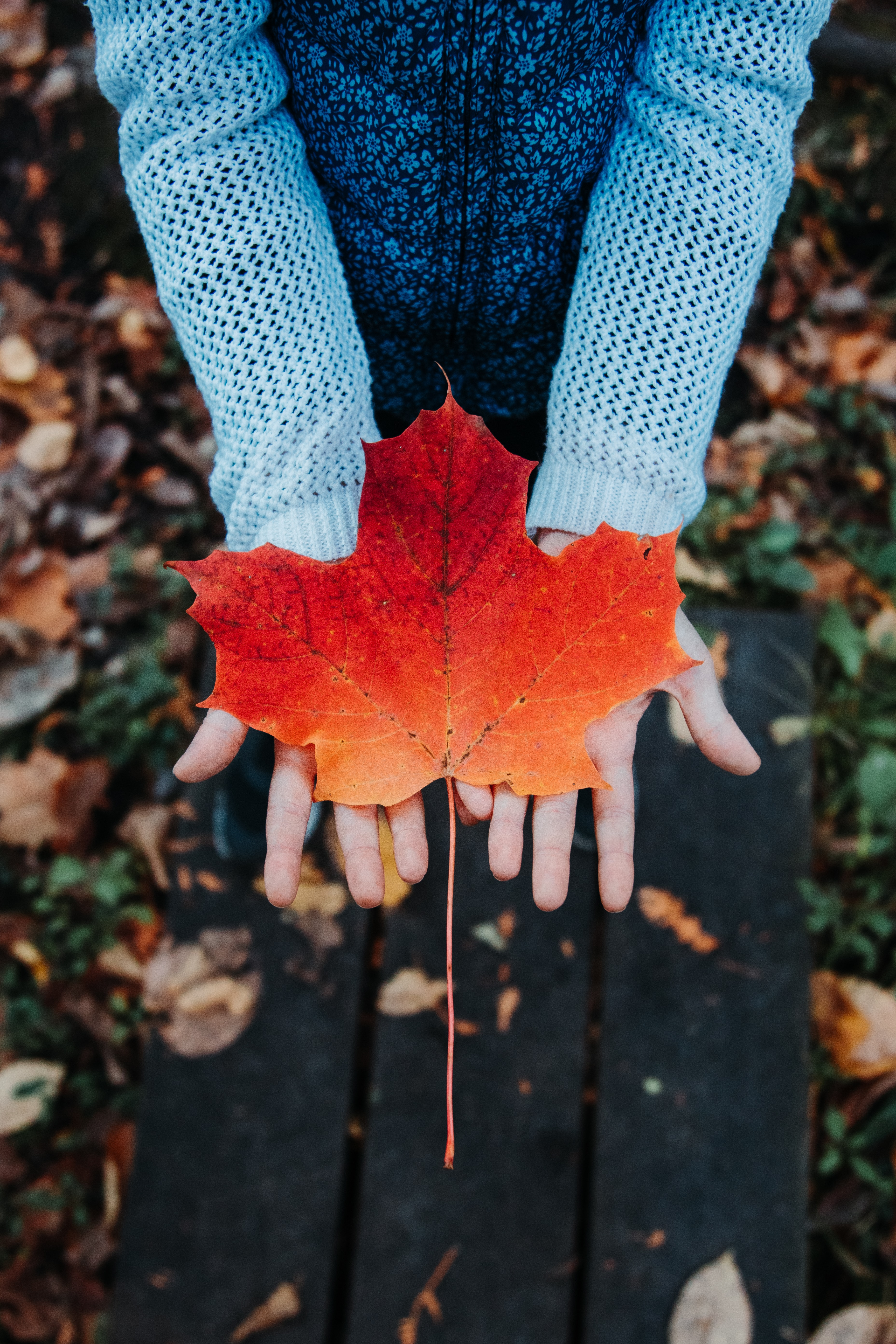 152914 download wallpaper Miscellanea, Miscellaneous, Maple, Sheet, Leaf, Autumn, Hands, Sweater screensavers and pictures for free