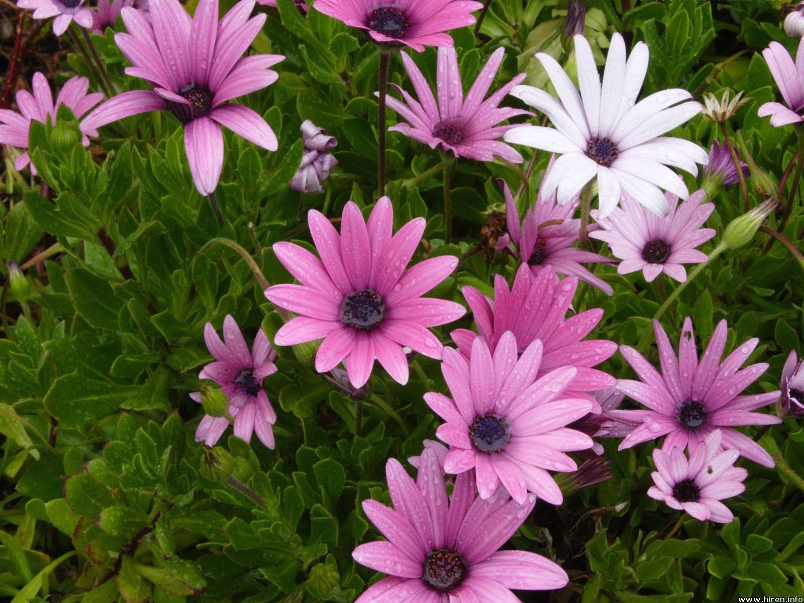 10607 descargar fondo de pantalla Plantas, Flores: protectores de pantalla e imágenes gratis