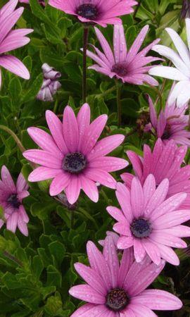 10607 скачать обои Растения, Цветы - заставки и картинки бесплатно