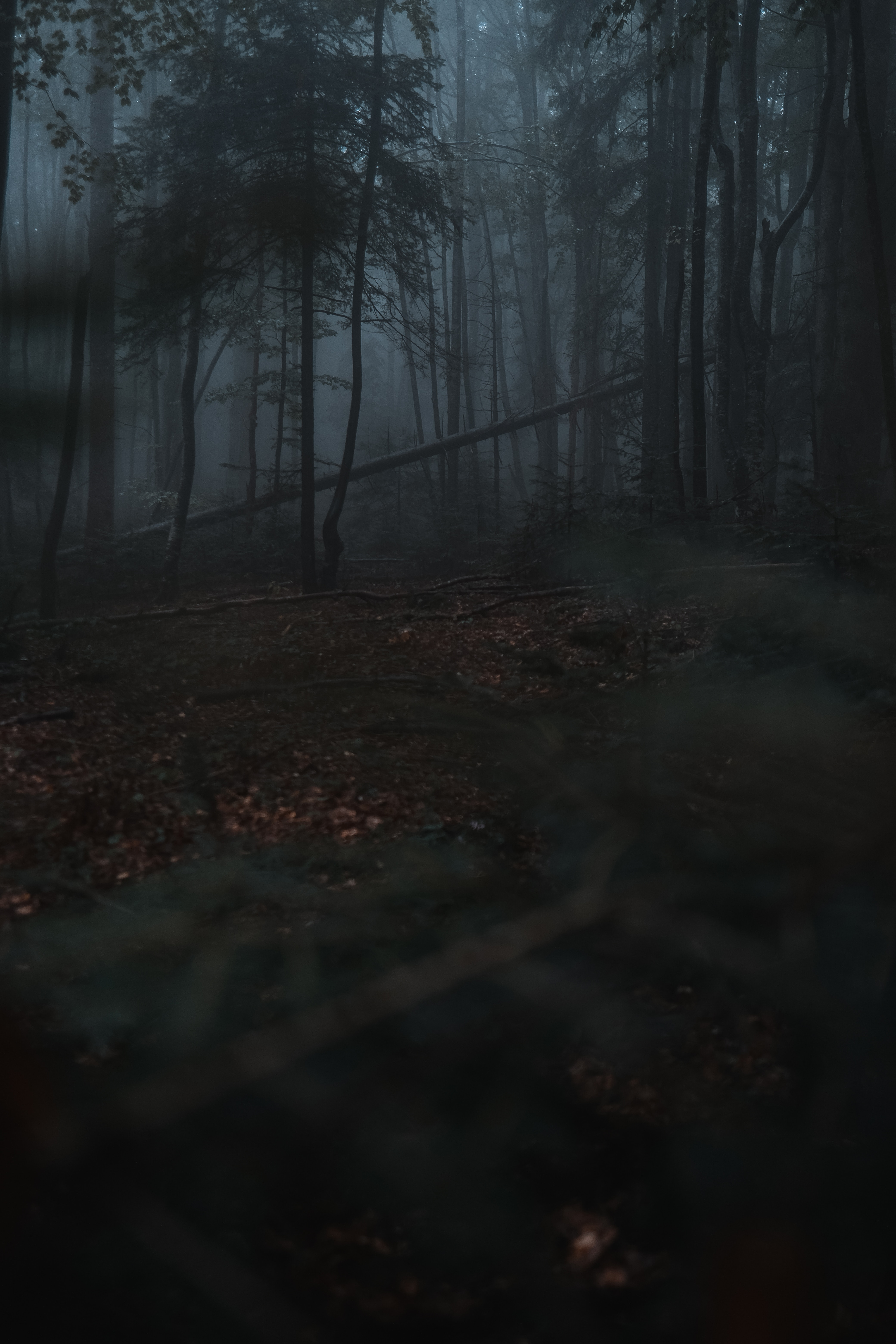 54443 Screensavers and Wallpapers Dark for phone. Download Nature, Forest, Fog, Trees, Gloomy, Dark pictures for free