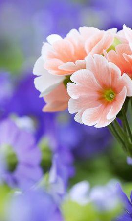 14974 скачать обои Растения, Цветы - заставки и картинки бесплатно