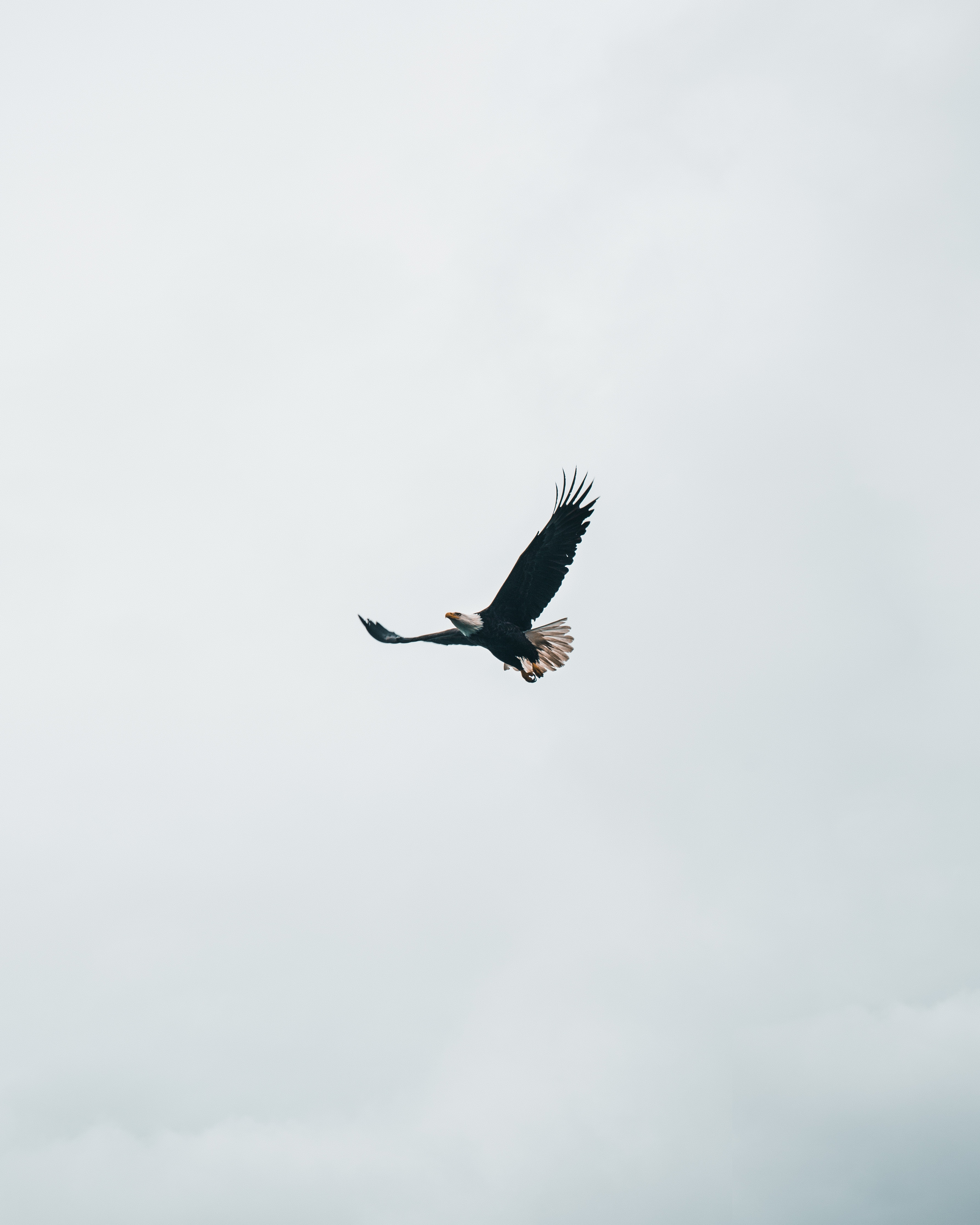70794 download wallpaper Animals, Bald Eagle, White-Headed Eagle, Eagle, Flight, Sky, Minimalism screensavers and pictures for free