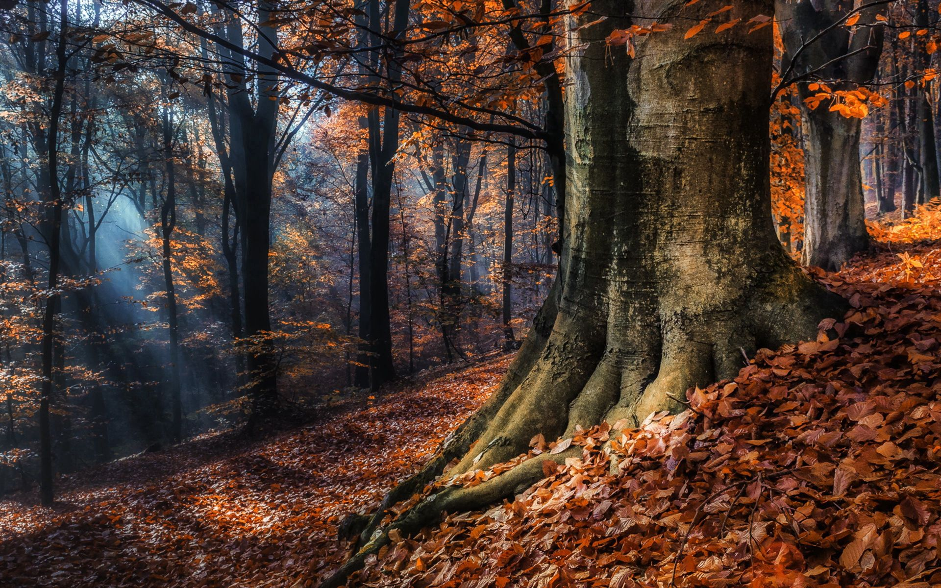 92116 download wallpaper Autumn, Nature, Trees, Forest, Foliage screensavers and pictures for free