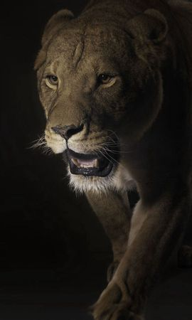 141463 download wallpaper Animals, Lion, Muzzle, Shadow, Dark, Predator, Big Cat screensavers and pictures for free