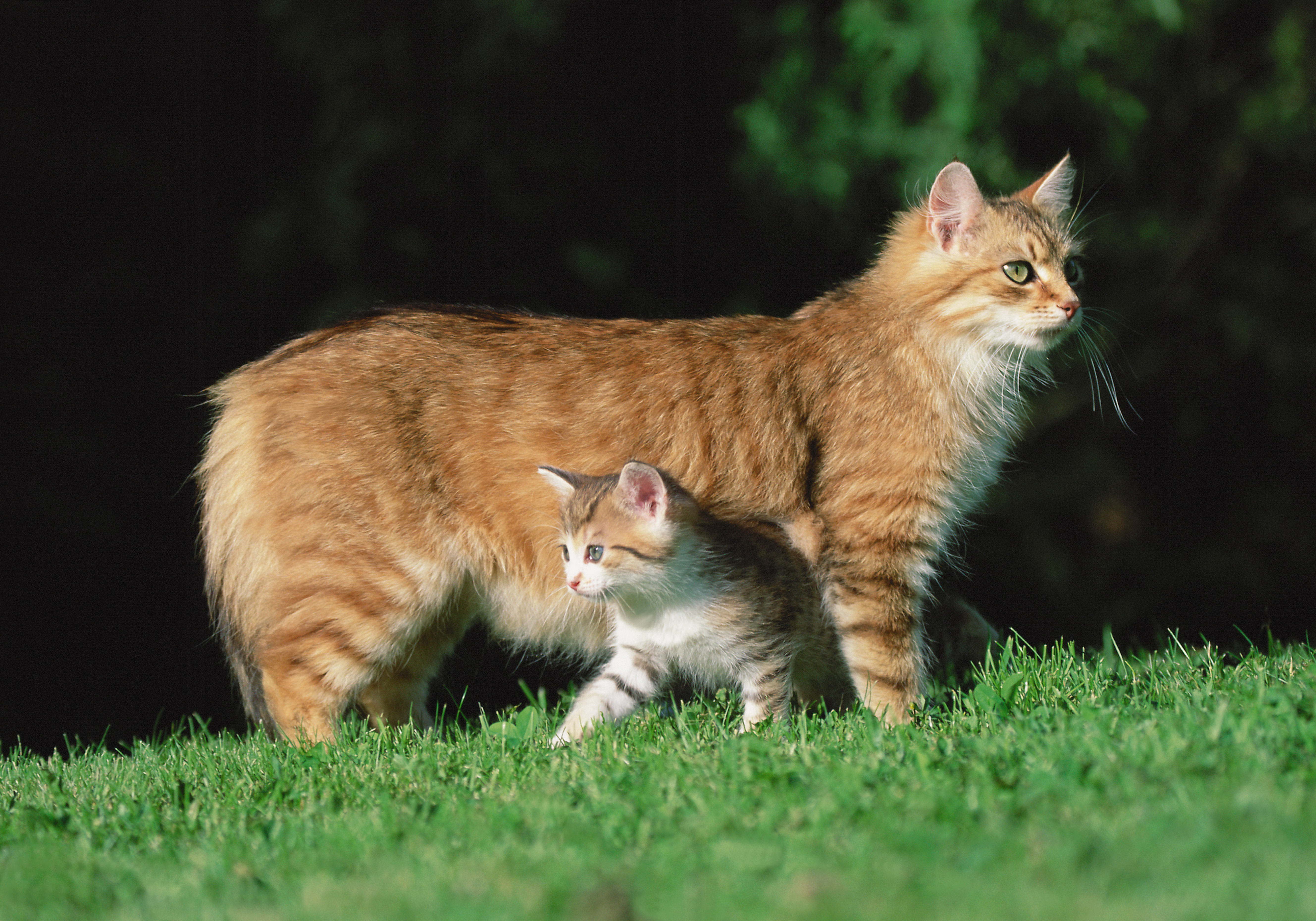 56407 Screensavers and Wallpapers Kitten for phone. Download Animals, Grass, Cat, Kitty, Kitten pictures for free