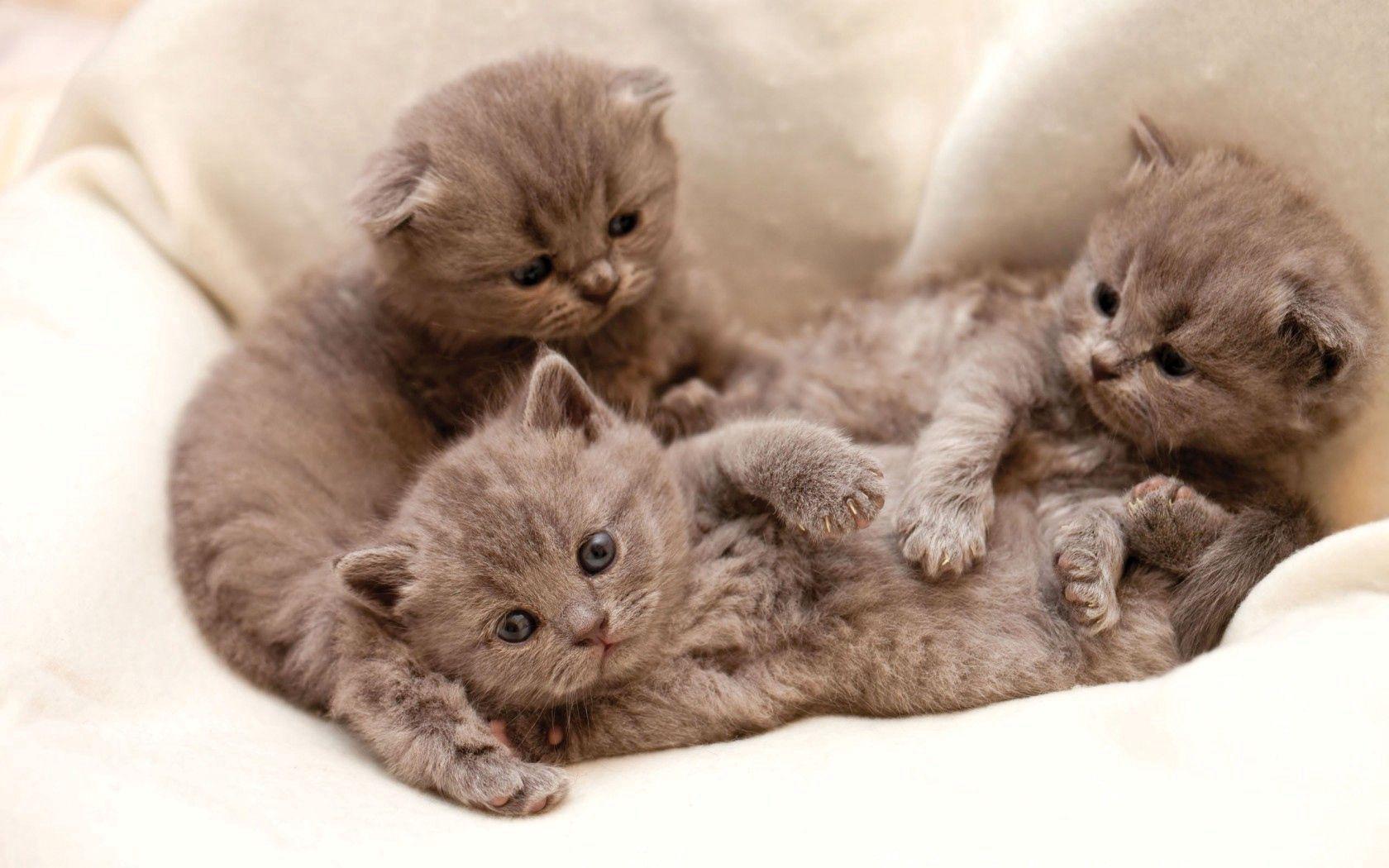 84547 Hintergrundbild herunterladen Katzen, Tiere, Hintergrund, Drei - Bildschirmschoner und Bilder kostenlos
