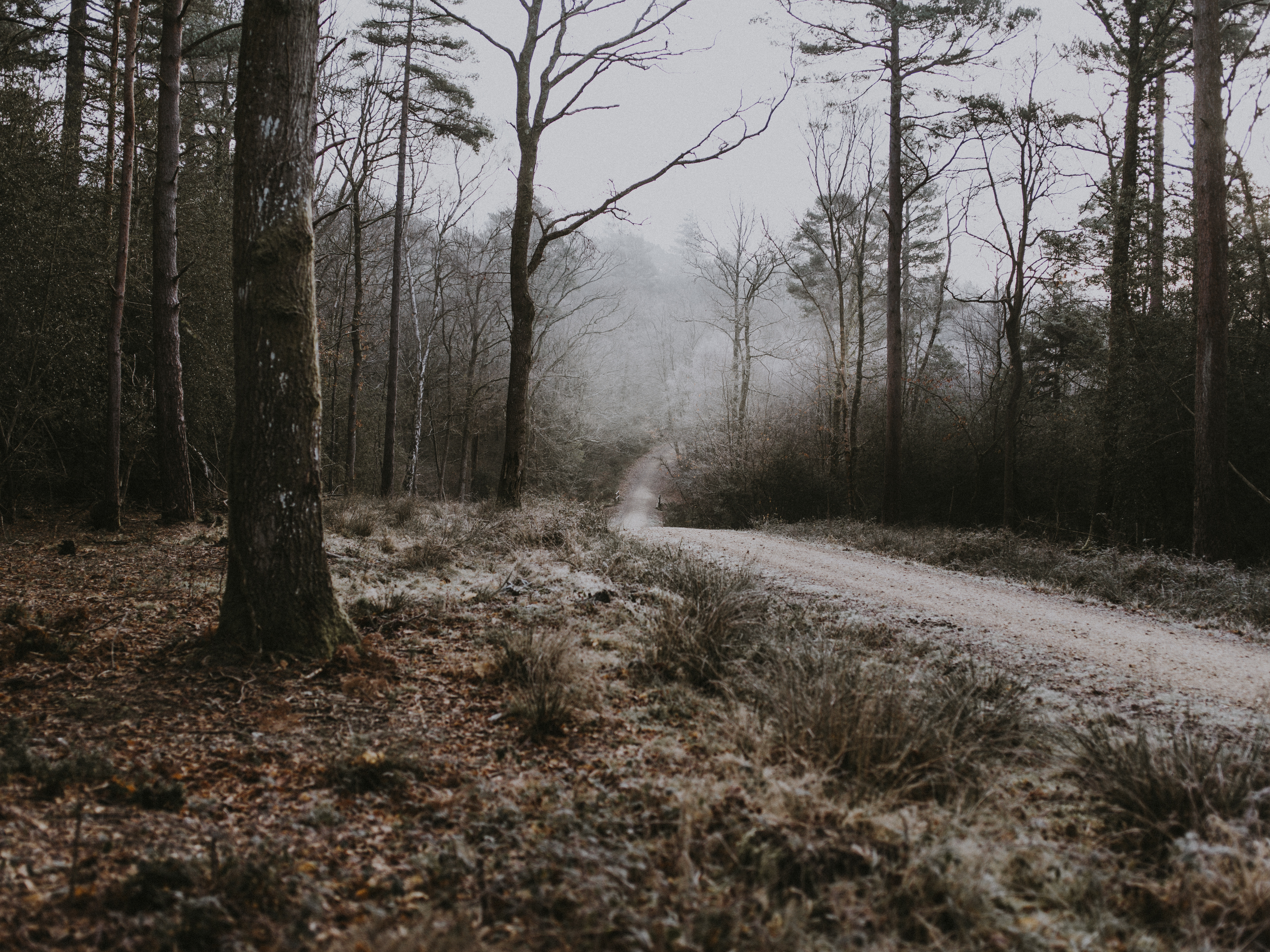 70246 Screensavers and Wallpapers Path for phone. Download Nature, Trees, Autumn, Forest, Fog, Path, Frost, Hoarfrost pictures for free