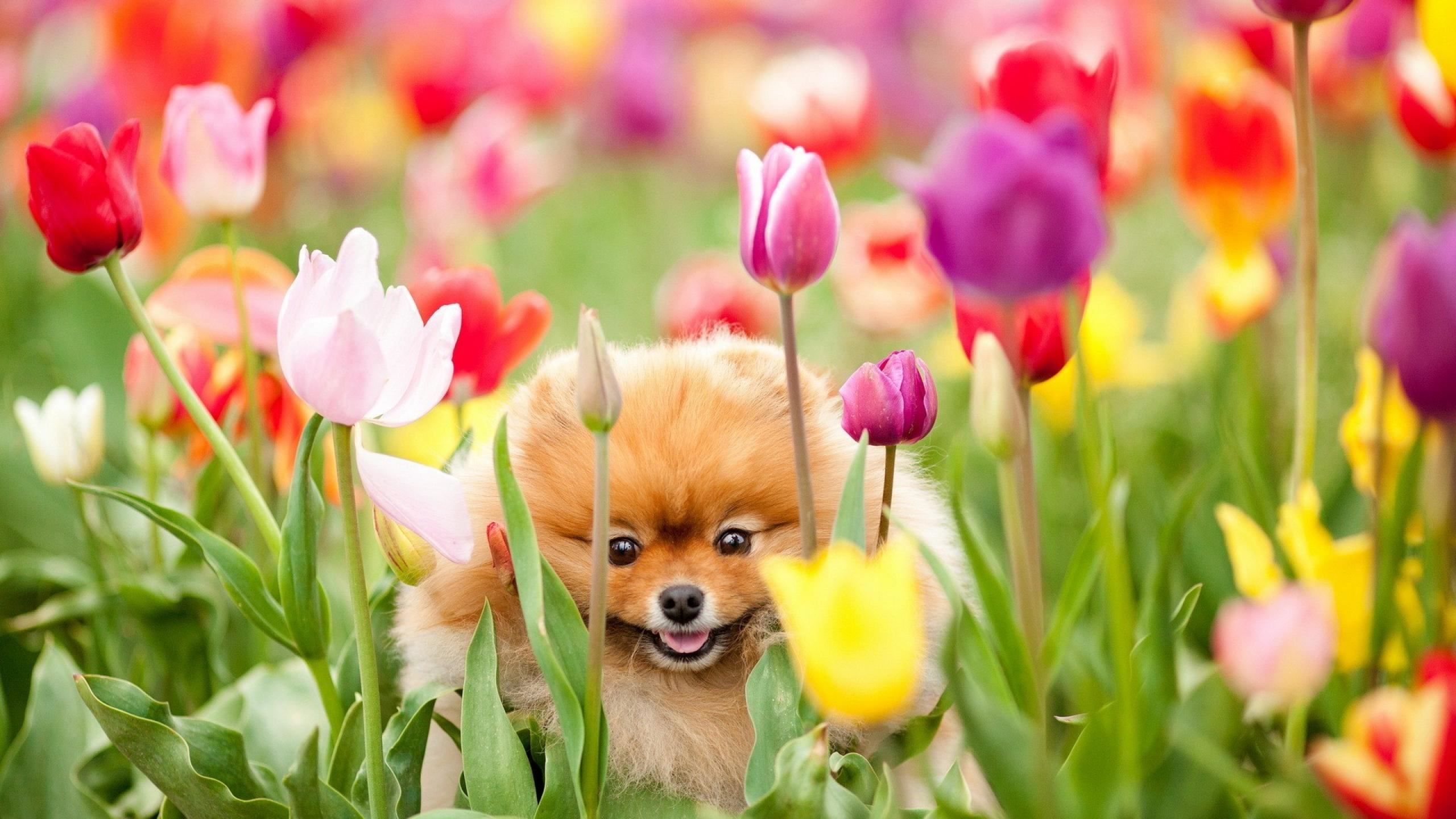 16065 download wallpaper Animals, Dogs screensavers and pictures for free