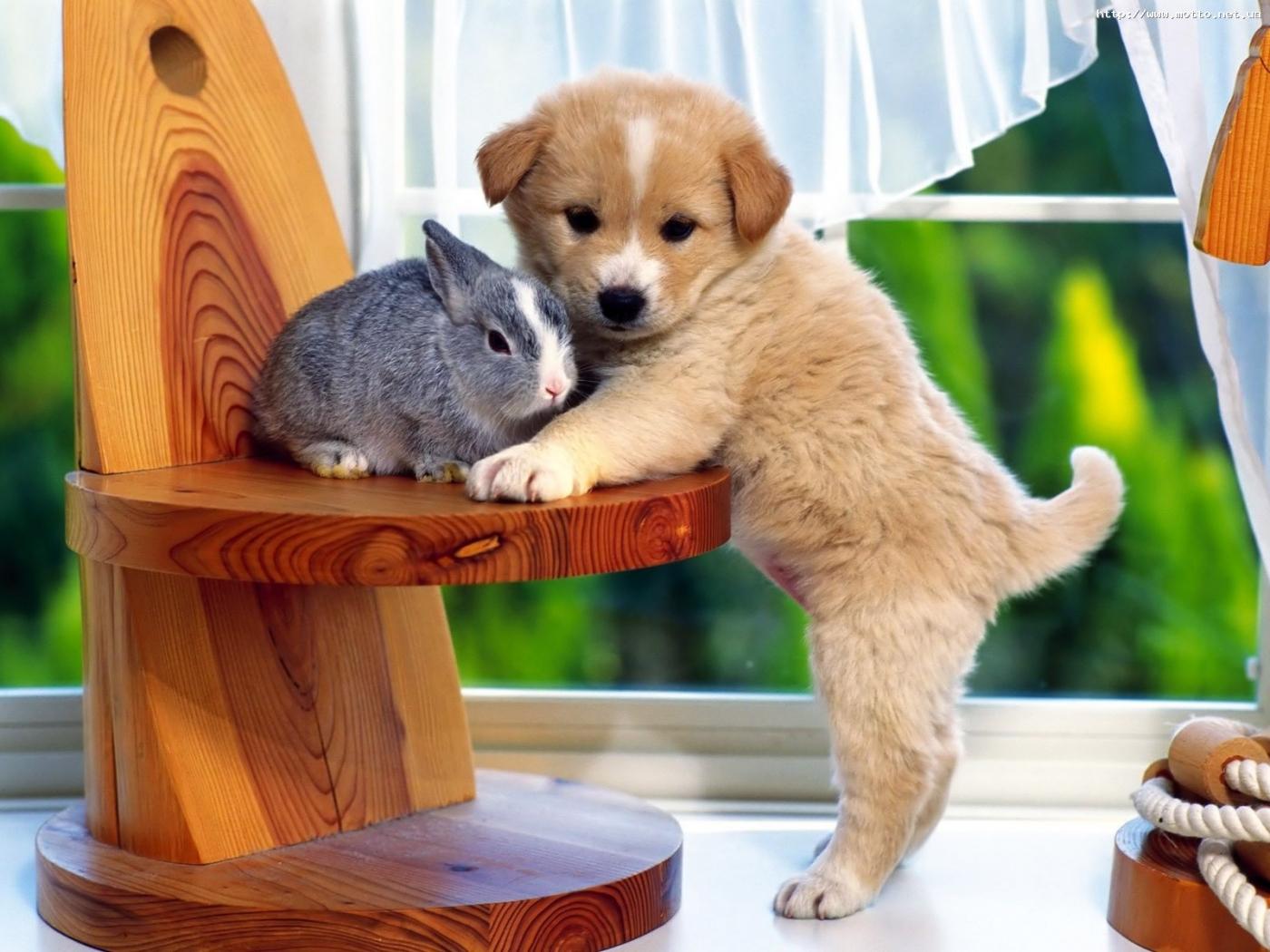 26100 скачать обои Животные, Собаки, Кролики - заставки и картинки бесплатно