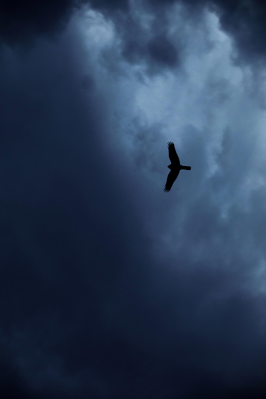 156425 скачать обои Животные, Орел, Птица, Силуэт, Полет, Небо - заставки и картинки бесплатно