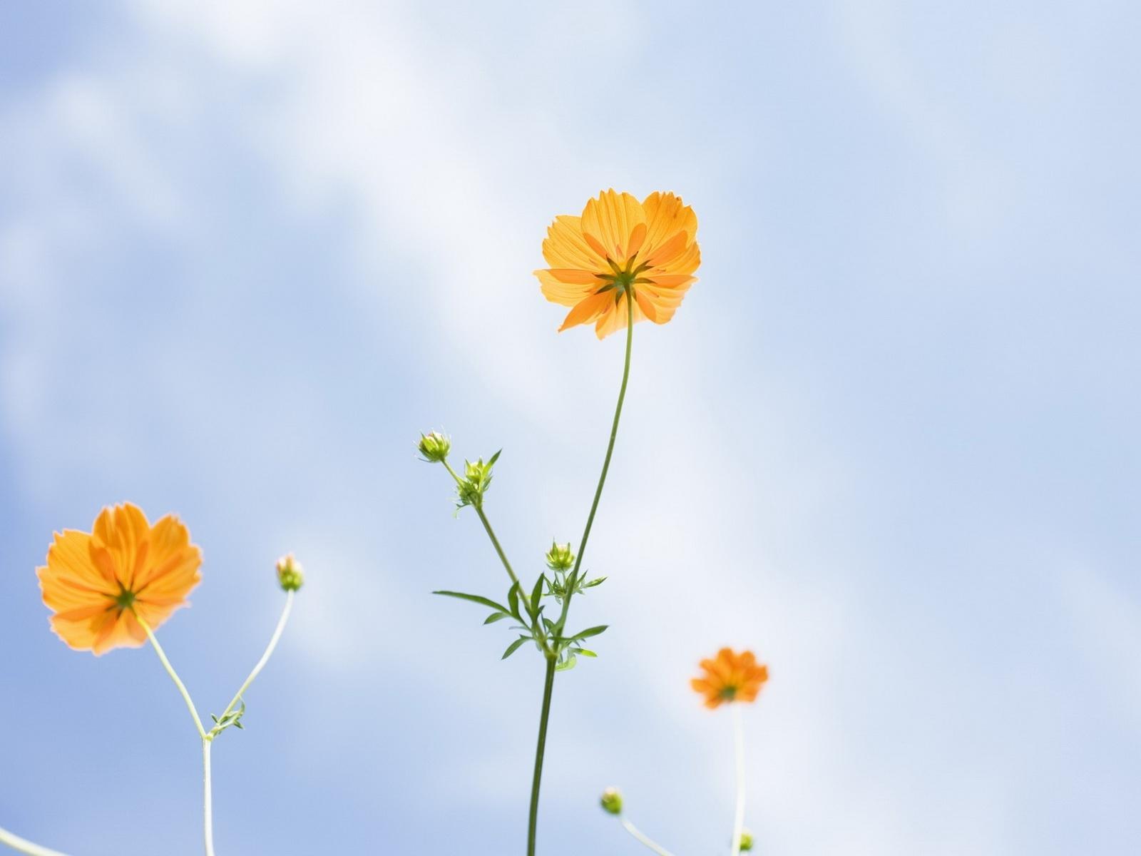 6897 скачать обои Растения, Цветы - заставки и картинки бесплатно