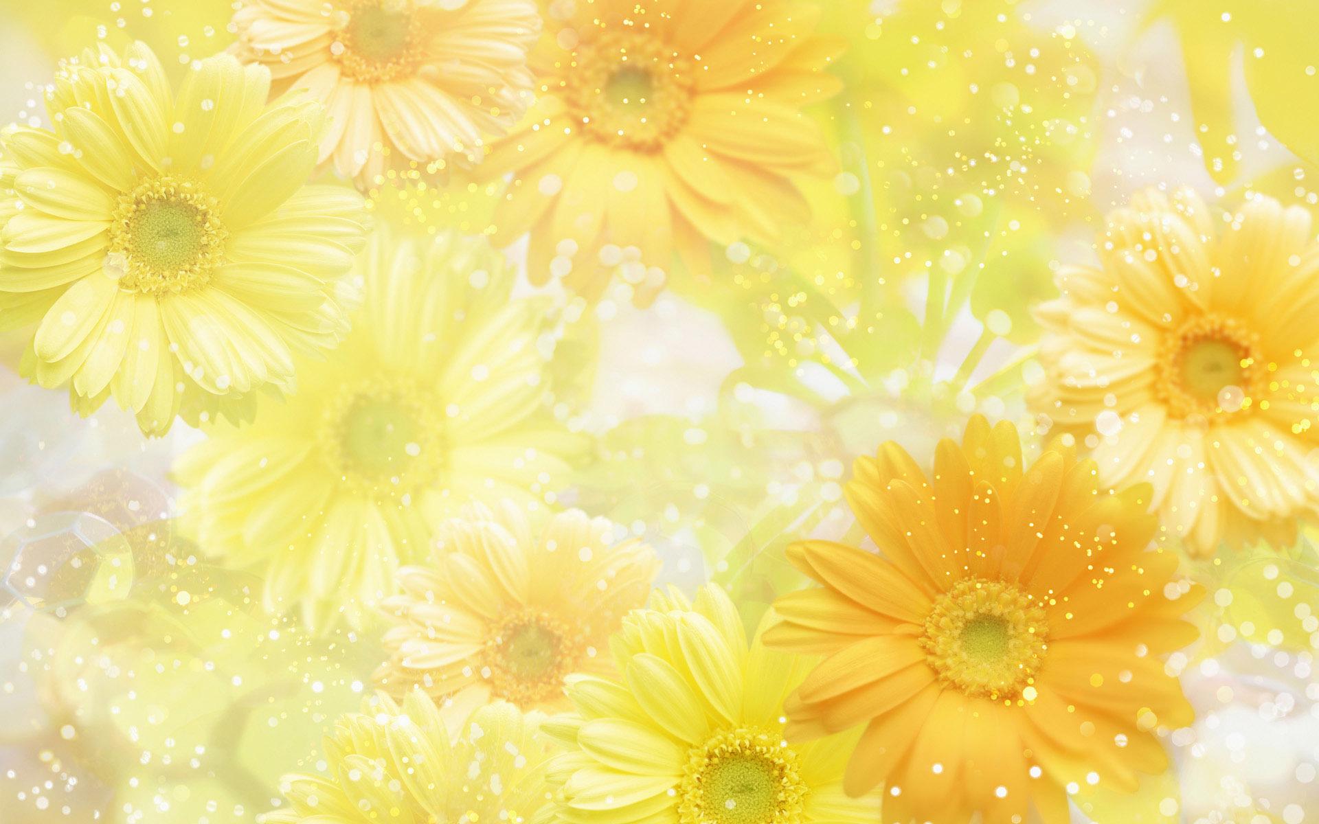 12799 скачать обои Растения, Цветы, Фон - заставки и картинки бесплатно