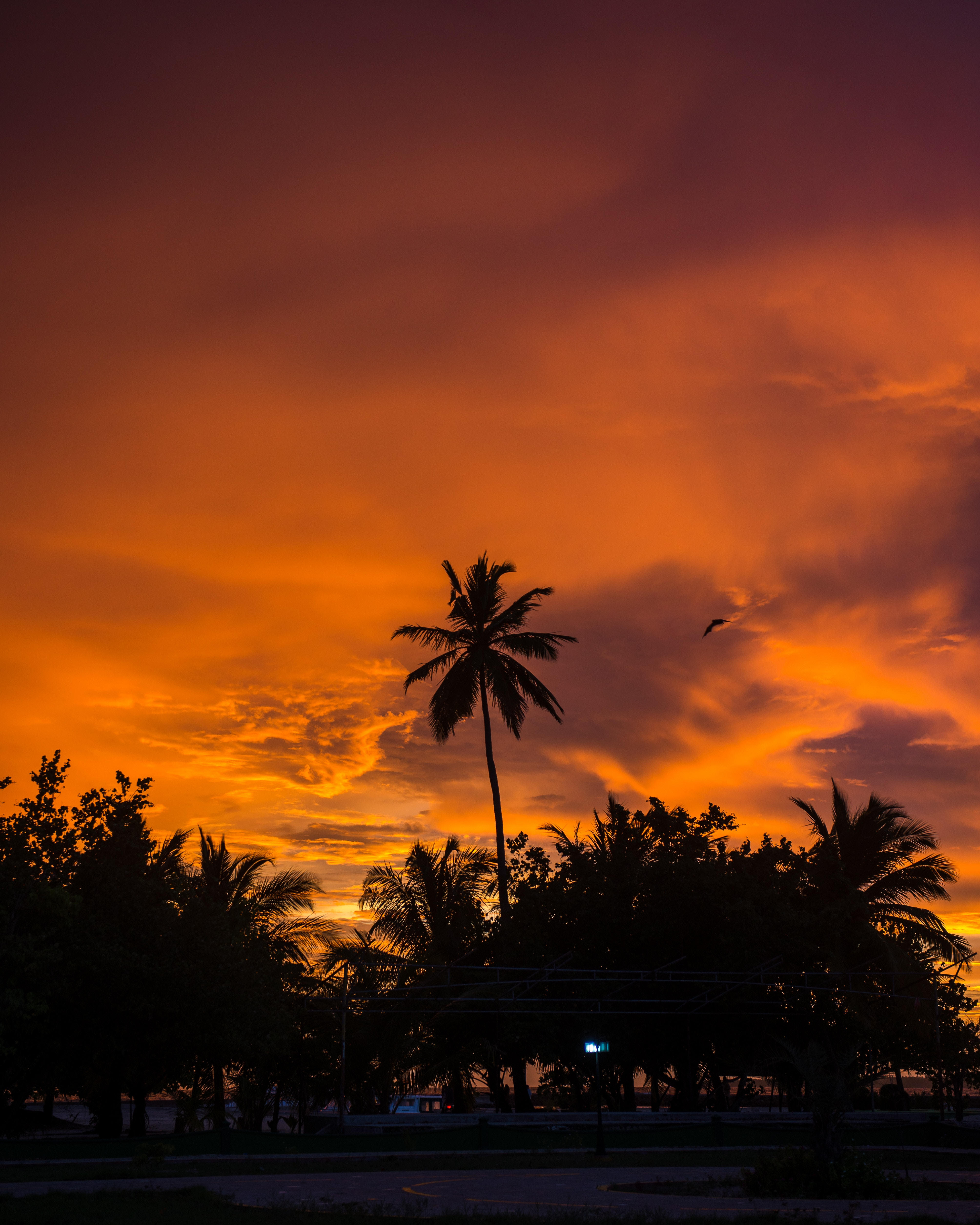 105061 download wallpaper Nature, Sunset, Sky, Clouds, Palms, Tropics screensavers and pictures for free