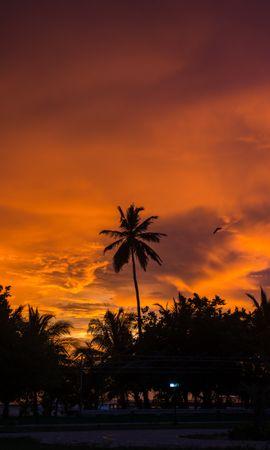 105061 baixar papel de parede Natureza, Pôr Do Sol, Trópicos, Céu, Nuvens, Palms - protetores de tela e imagens gratuitamente
