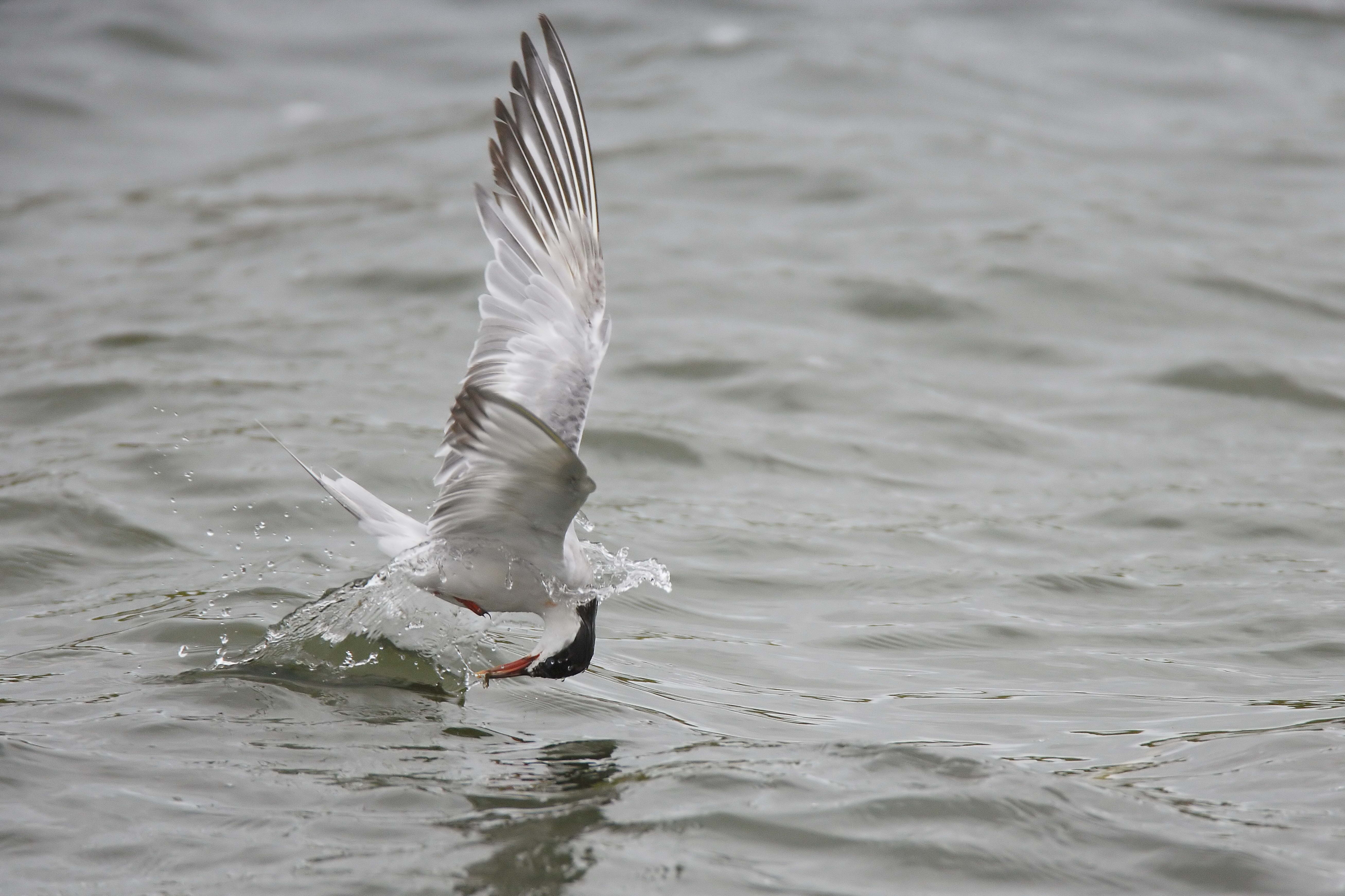 143295 download wallpaper Animals, Gull, Seagull, Mining, Hunting, Hunt screensavers and pictures for free