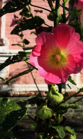 46180 descargar fondo de pantalla Plantas, Flores: protectores de pantalla e imágenes gratis