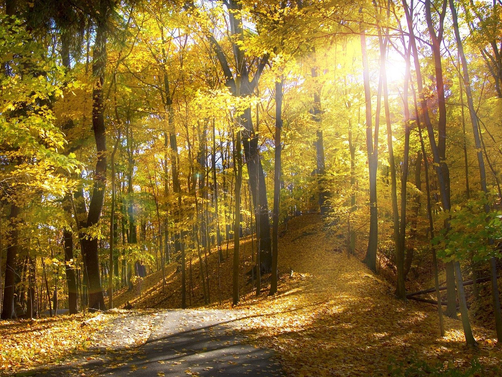 8633 скачать обои Пейзаж, Деревья, Осень, Солнце - заставки и картинки бесплатно