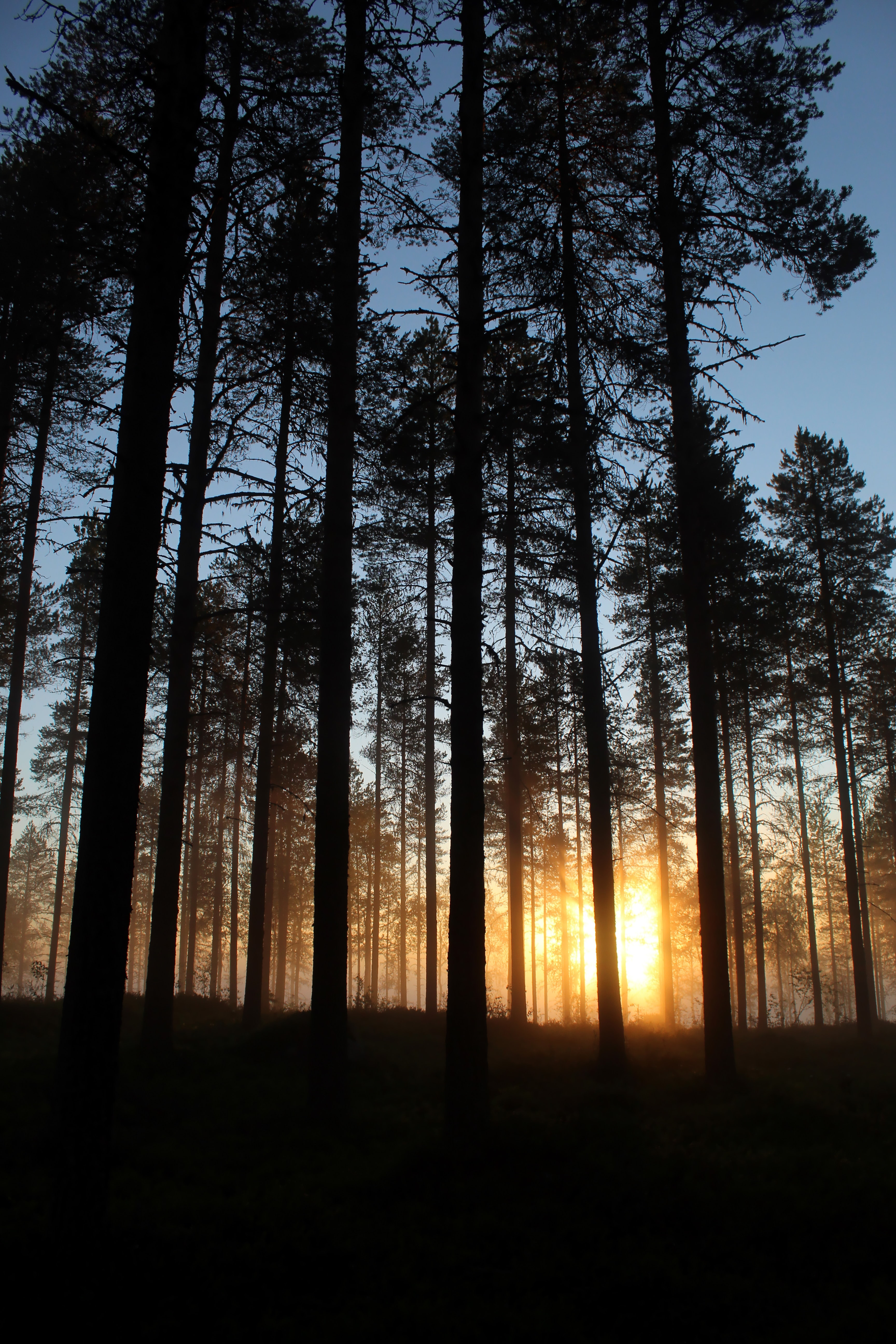 54664 Screensavers and Wallpapers Beams for phone. Download Nature, Trees, Sun, Dawn, Beams, Rays, Forest pictures for free