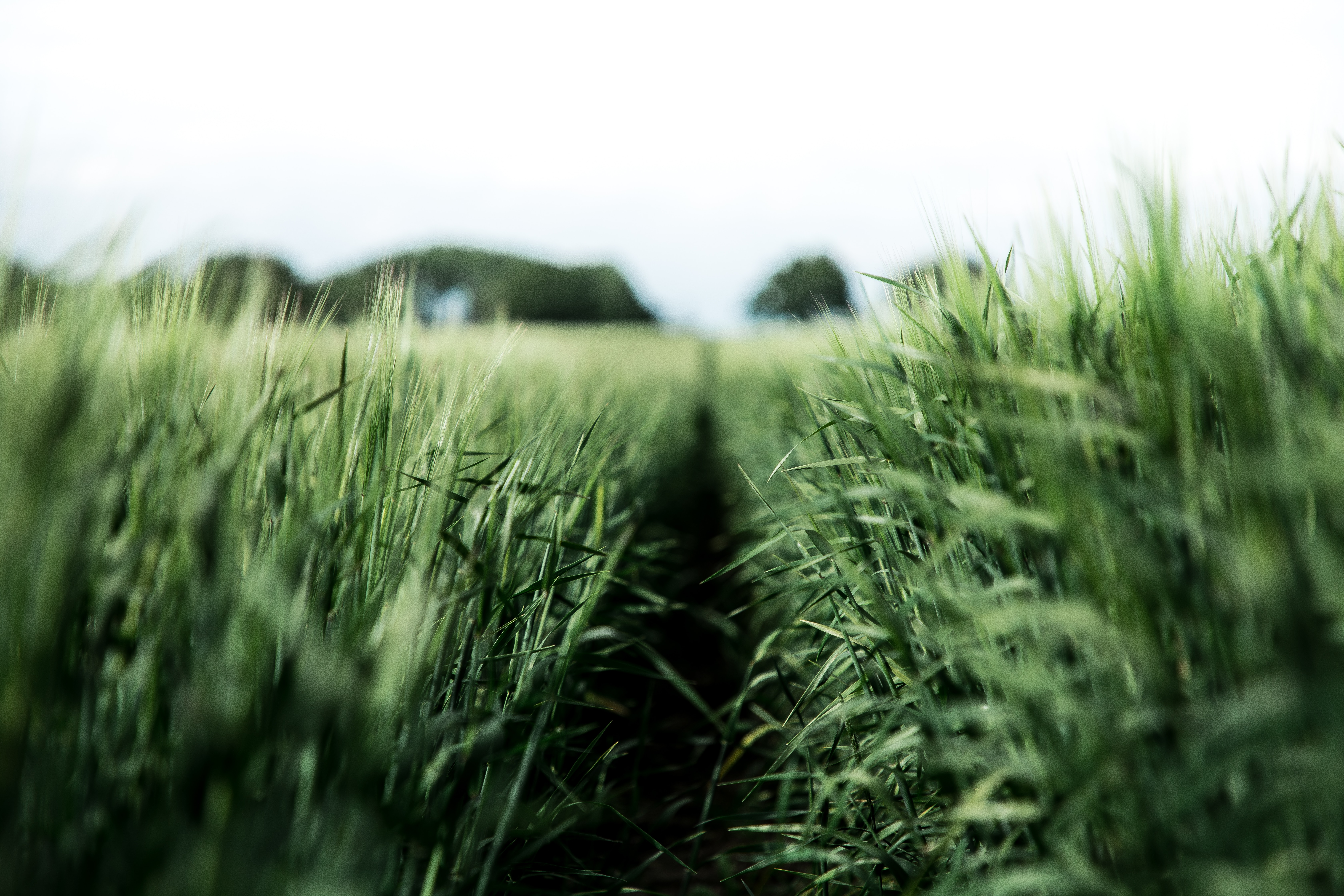 146790 Screensavers and Wallpapers Agriculture for phone. Download Nature, Field, Rye, Agriculture pictures for free