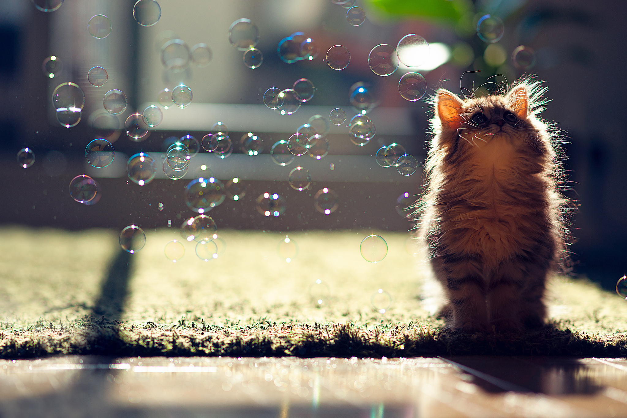 21239 download wallpaper Animals, Cats screensavers and pictures for free