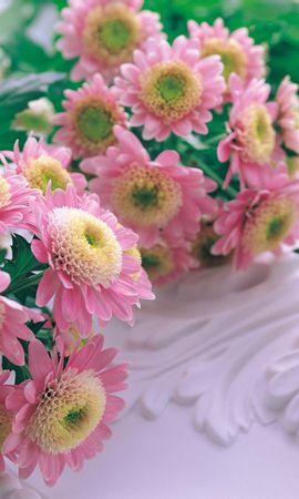 5471 скачать обои Растения, Цветы - заставки и картинки бесплатно