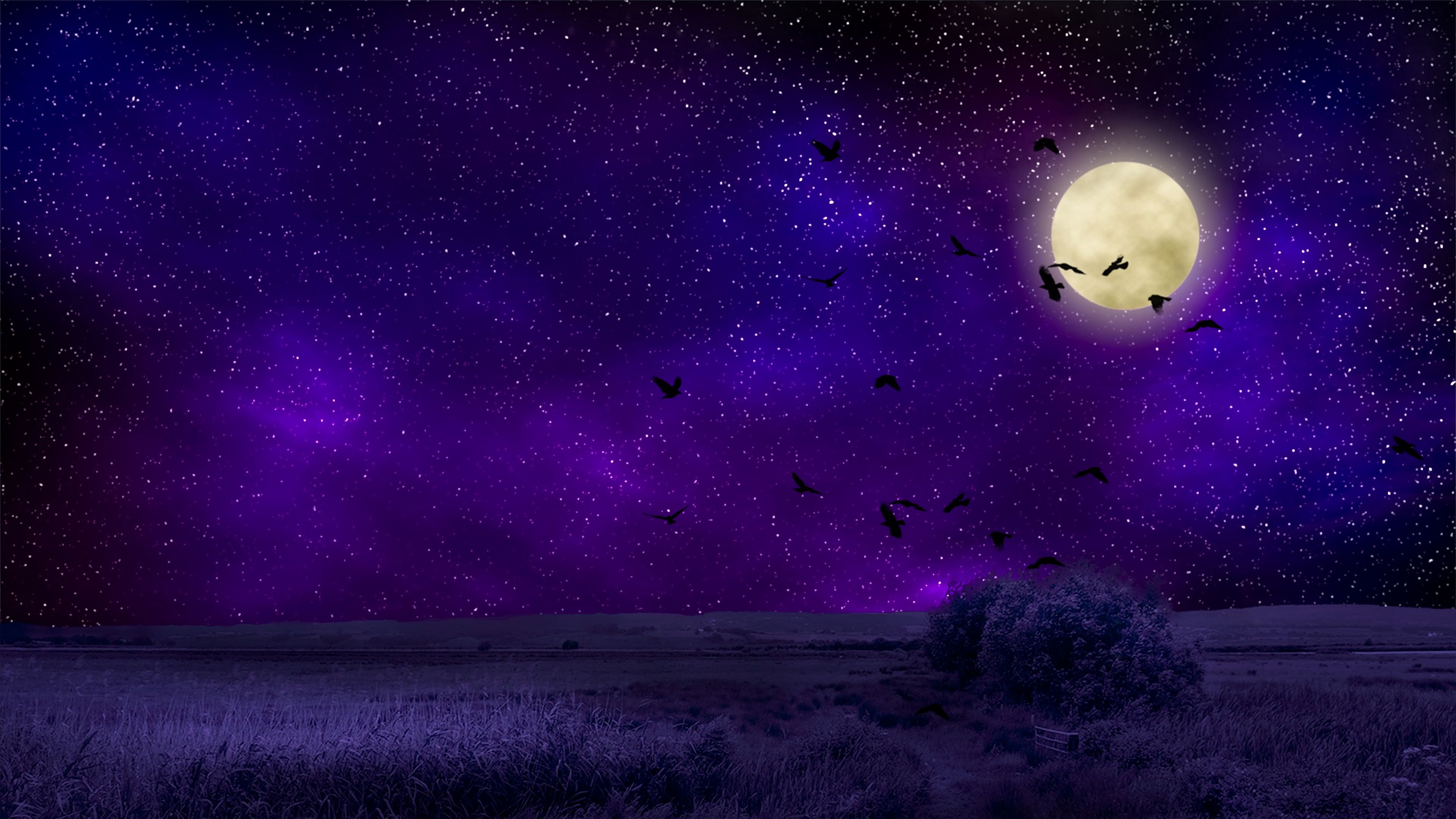 57317 download wallpaper Birds, Nature, Night, Starry Sky, Photoshop, Full Moon screensavers and pictures for free