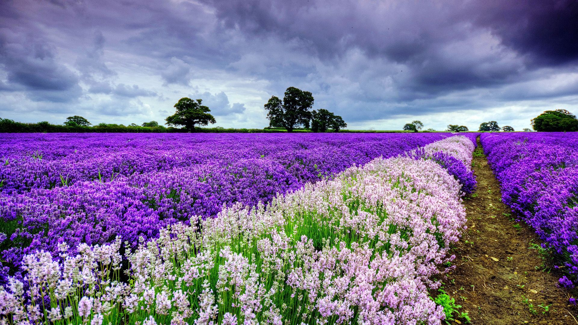 89225 Screensavers and Wallpapers Dahl for phone. Download Nature, Flowers, Summer, Field, Dahl, Distance pictures for free