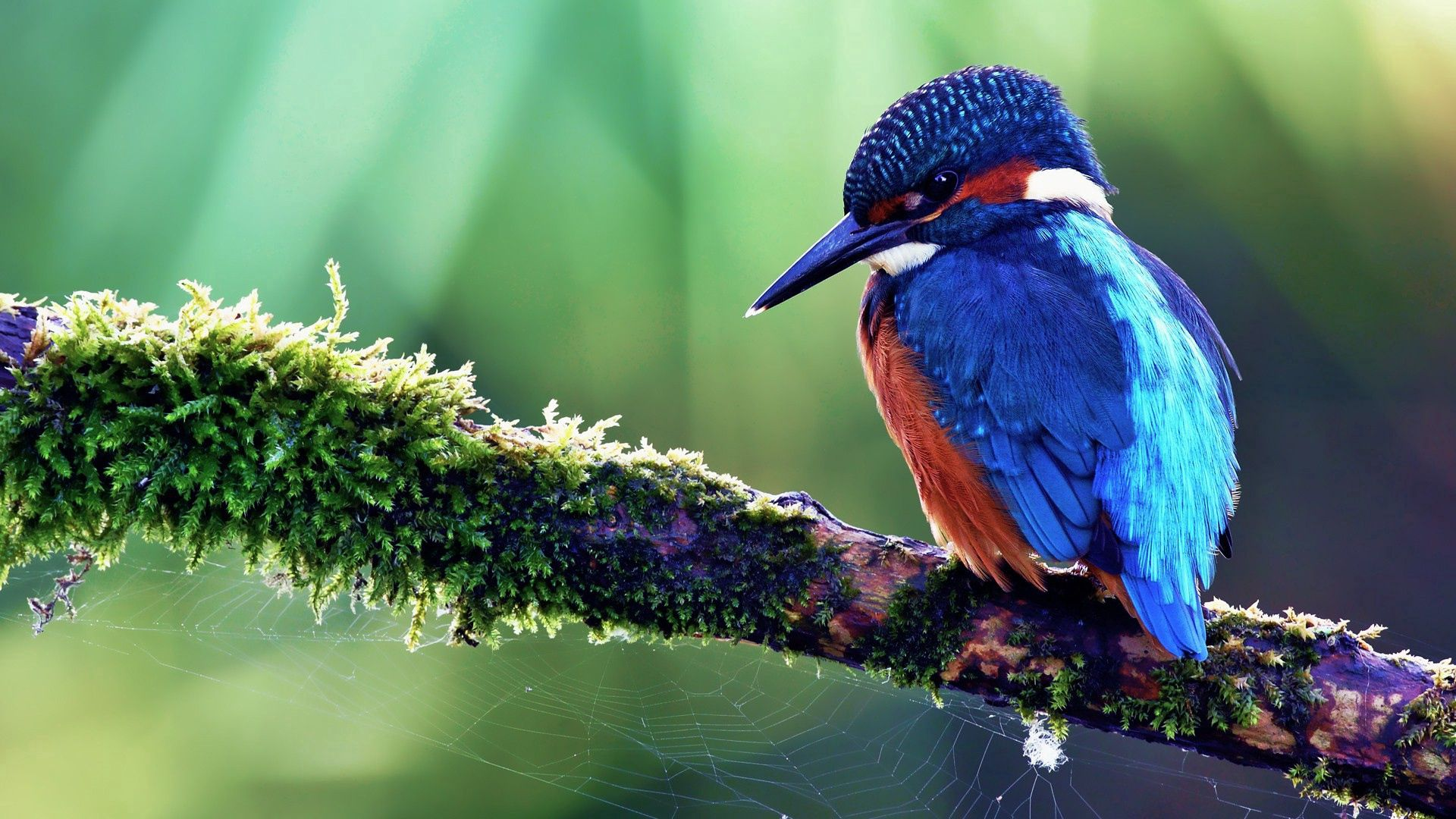 108897 Screensavers and Wallpapers Sit for phone. Download Animals, Bird, Wood, Sit, Tree, Color, Tropical Bird pictures for free
