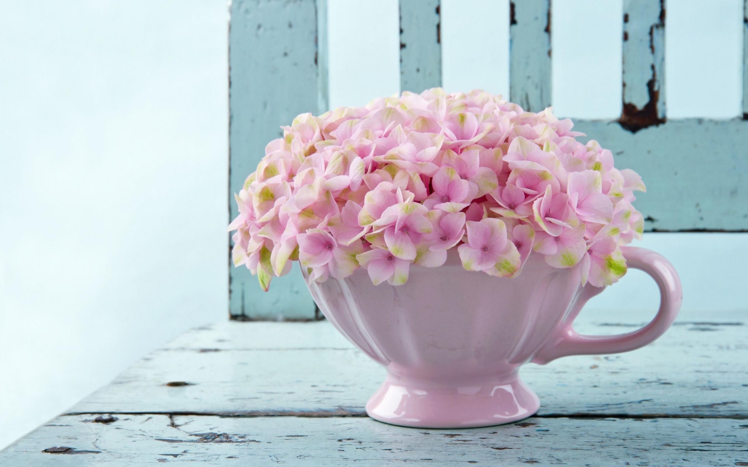 26493 скачать обои Растения, Цветы, Фон, Чашки, Натюрморт - заставки и картинки бесплатно