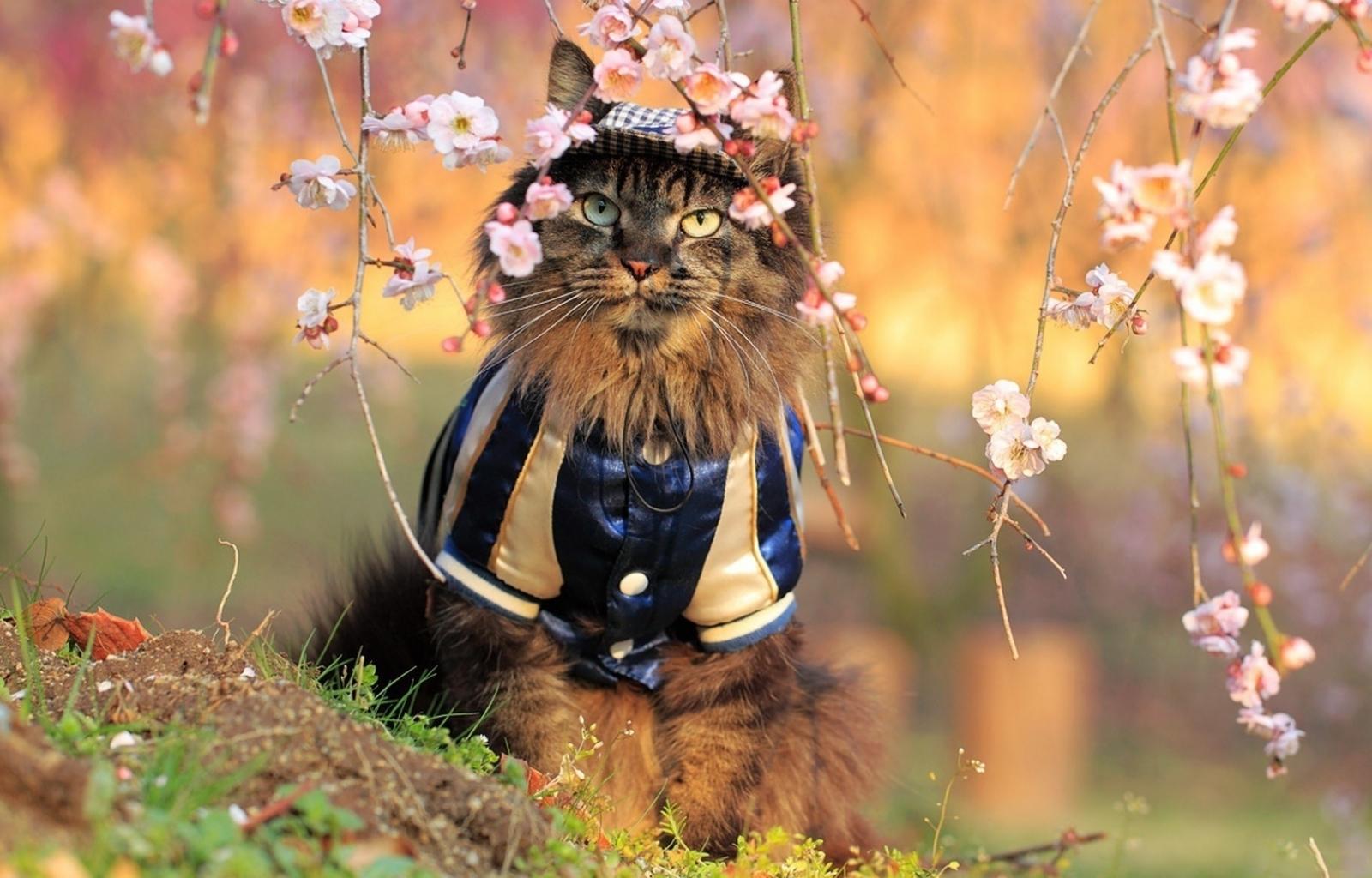 25394 скачать обои Животные, Кошки (Коты, Котики) - заставки и картинки бесплатно